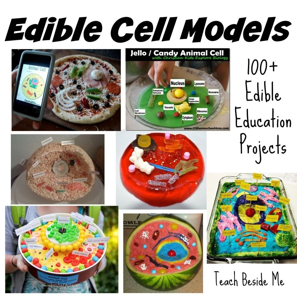 10 Ideal Edible Plant Cell Project Ideas 100 edible education projects cell model school and homeschool 1 2020