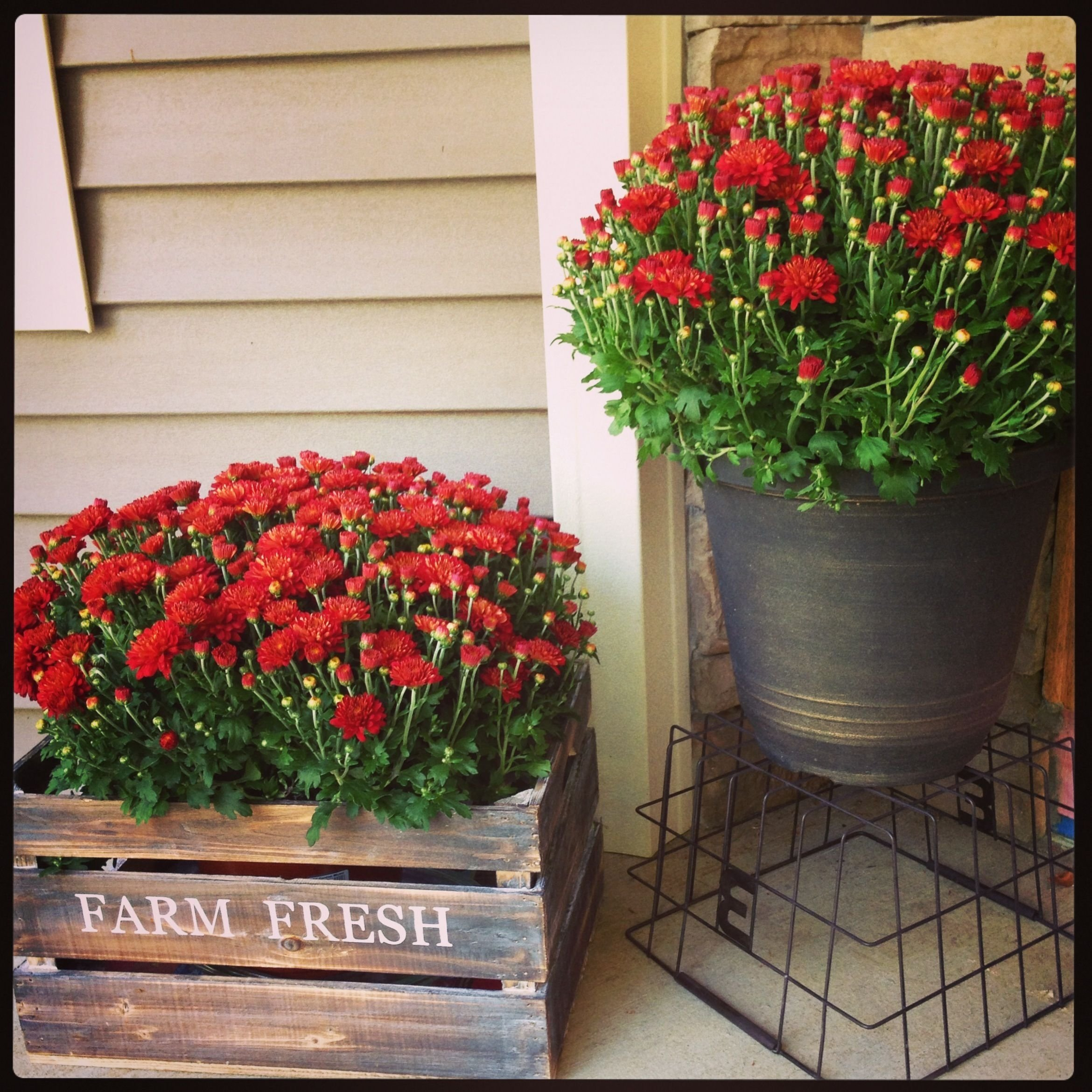 10 Fashionable Flower Pot Ideas For Front Porch 15 cheap and cute fall front porch decorating ideas front 2021
