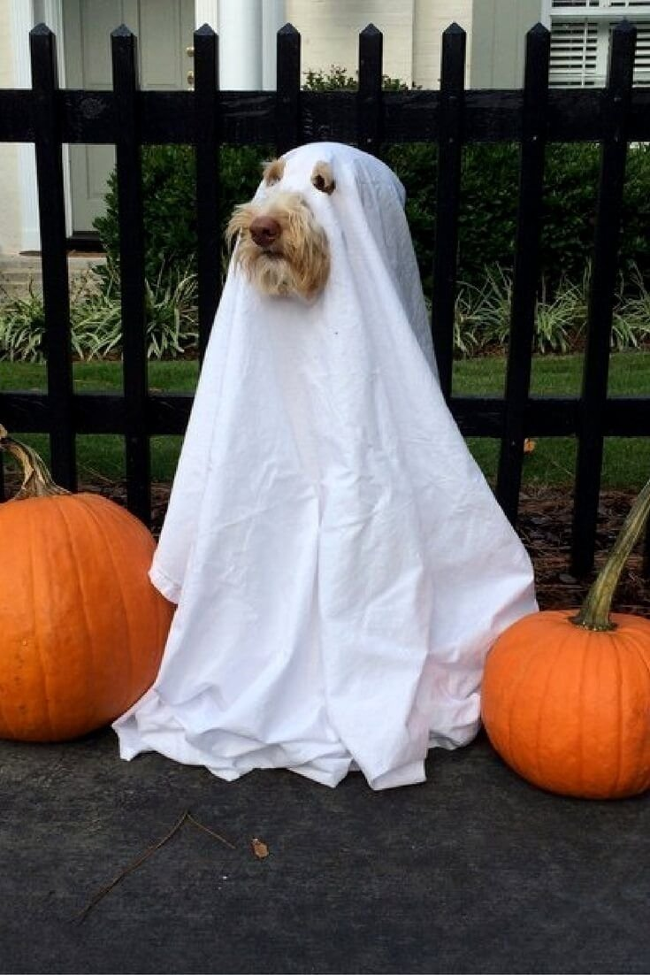 10 stylish halloween costumes for dogs ideas 23 unbelievable halloween costume ideas for your dog ghost
