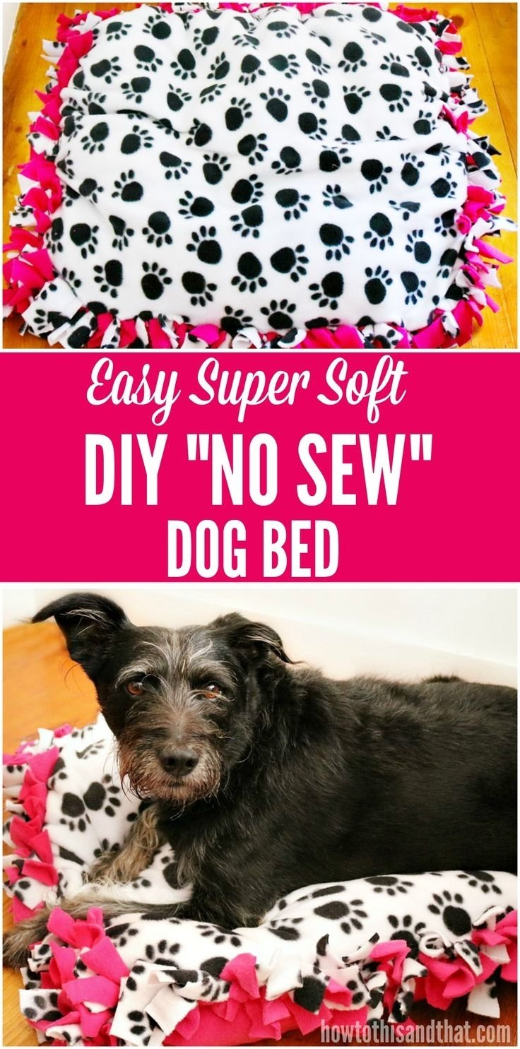 10 Fashionable Senior Project Ideas With Animals 246 best diy pet projects images on pinterest pets dog cat and 2020
