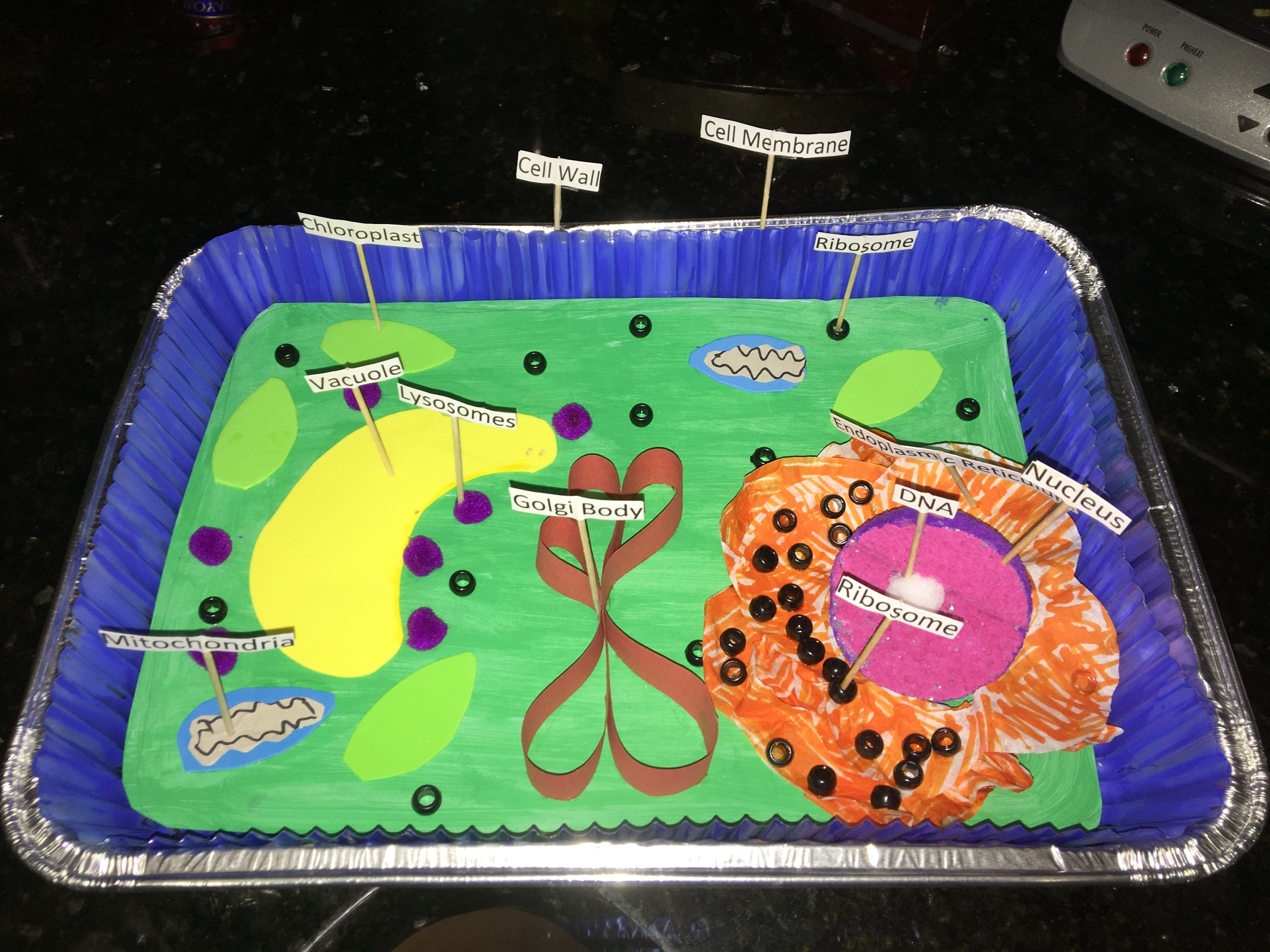 10 Stylish Plant Cell 3D Model Ideas 3 d plant cell classroom pinterest plant cell cell project 1 2020