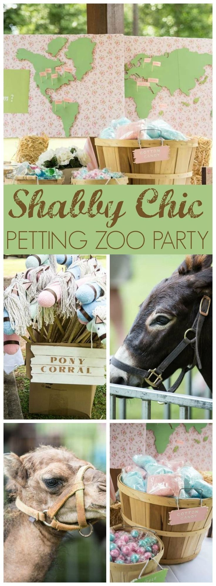 10 Gorgeous Petting Zoo Birthday Party Ideas 31 best animal party petting zoos pony rides texas based images on 2020