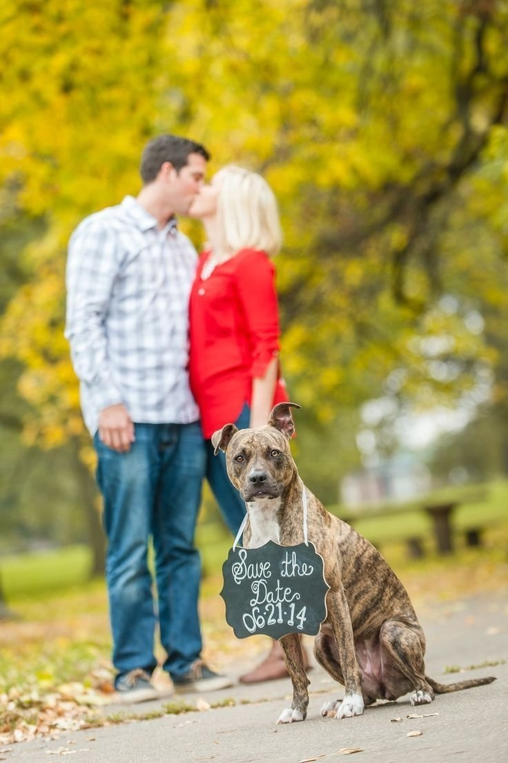 10 Nice Save The Date Ideas With Dogs 32 best save the date ideas images on pinterest photo ideas save 1 2020