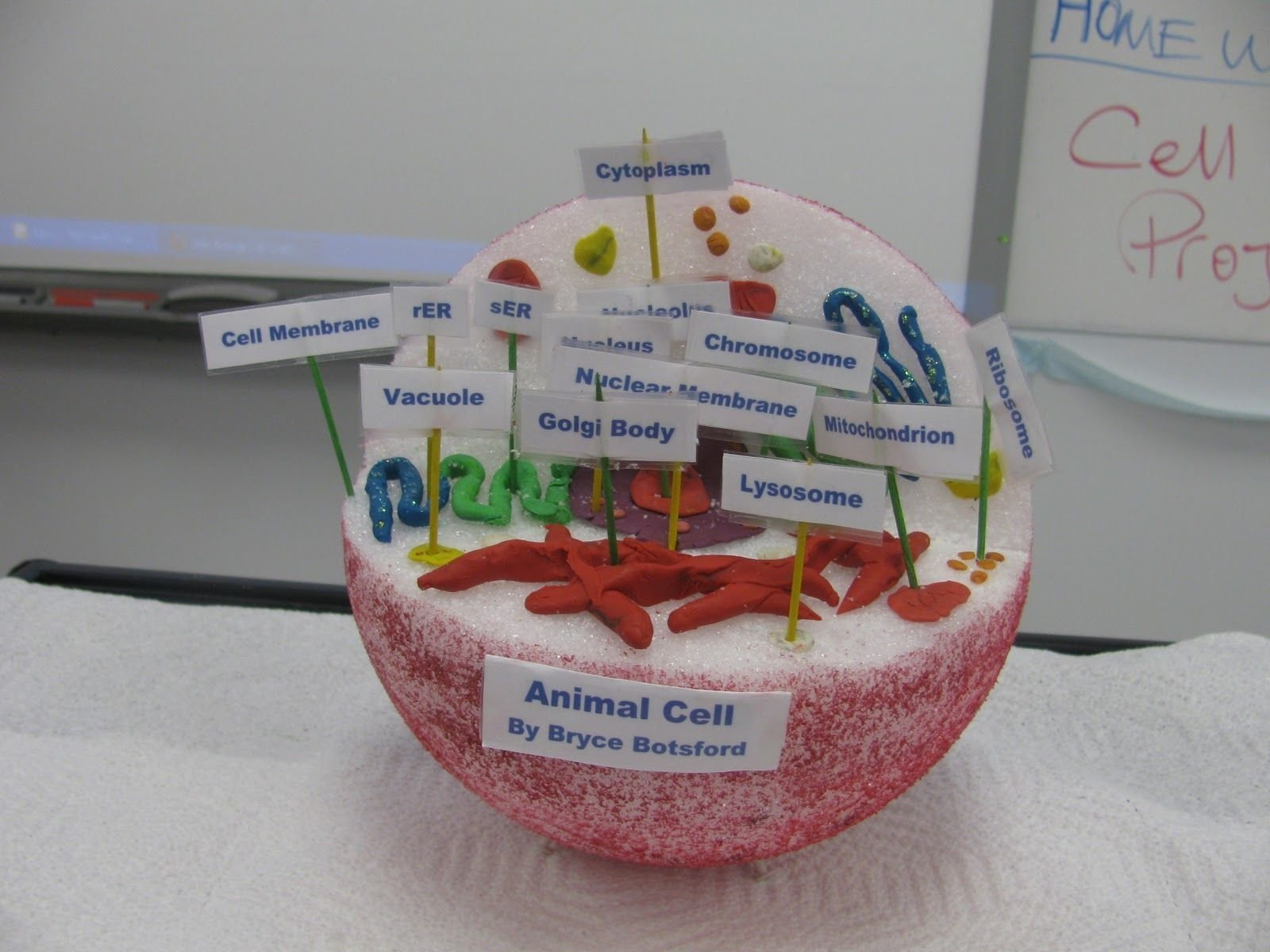 10 Most Recommended 3D Animal Cell Model Ideas 3d cell model project ideas cells project projects email this