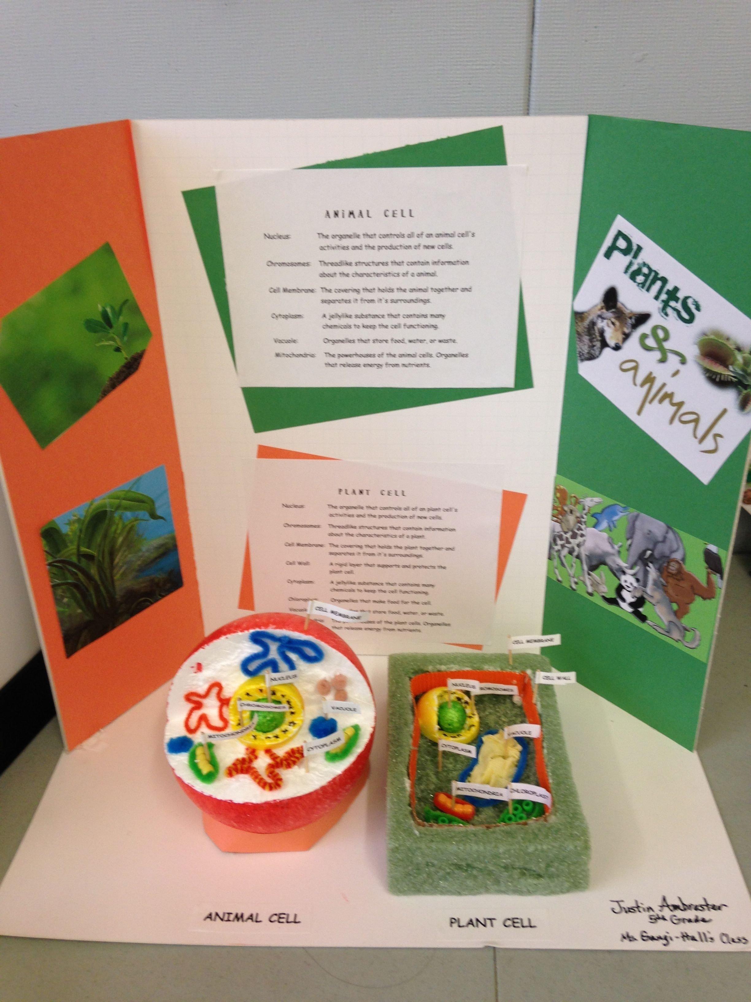 10 Ideal 3D Plant Cell Project Ideas 3d plant animal cell project deborah gangi hall mckinley school k 2020