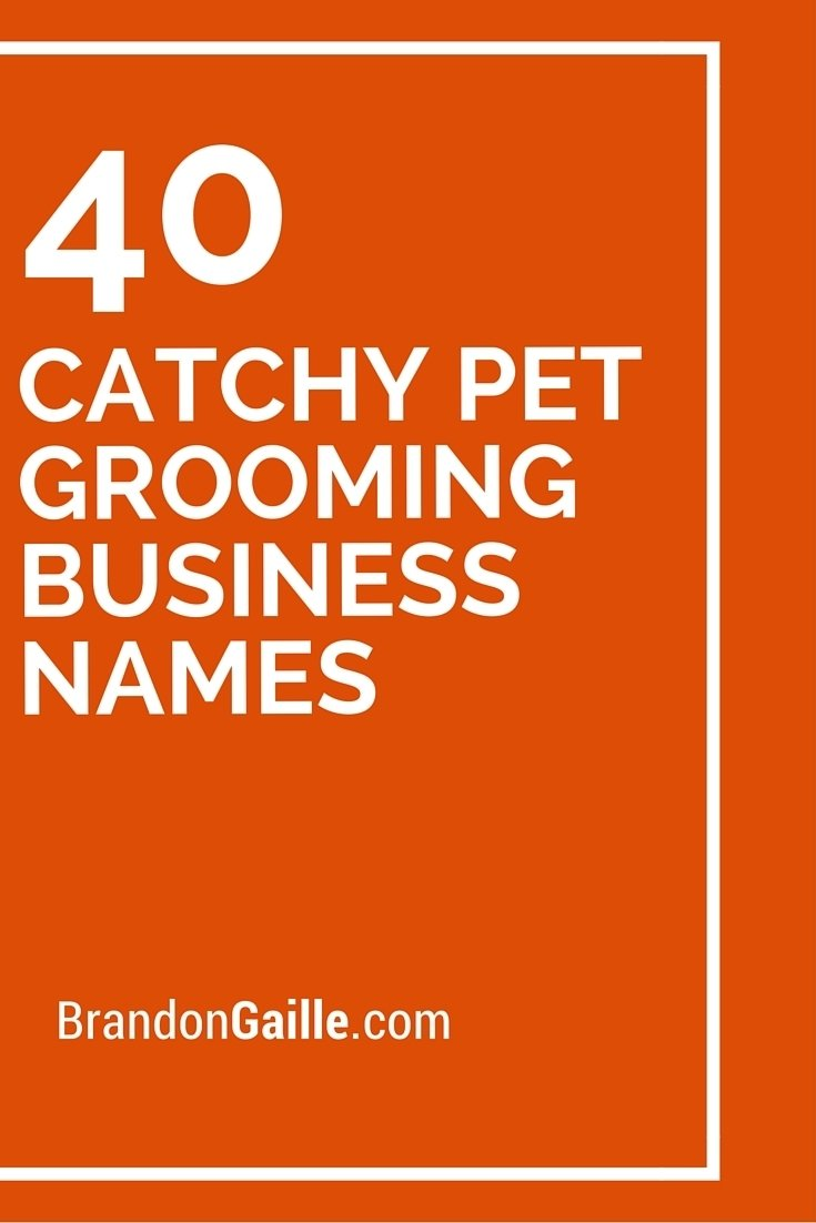 10 Lovable Boutique Names Ideas Catchy Simple 41 catchy pet grooming business names pet grooming business and