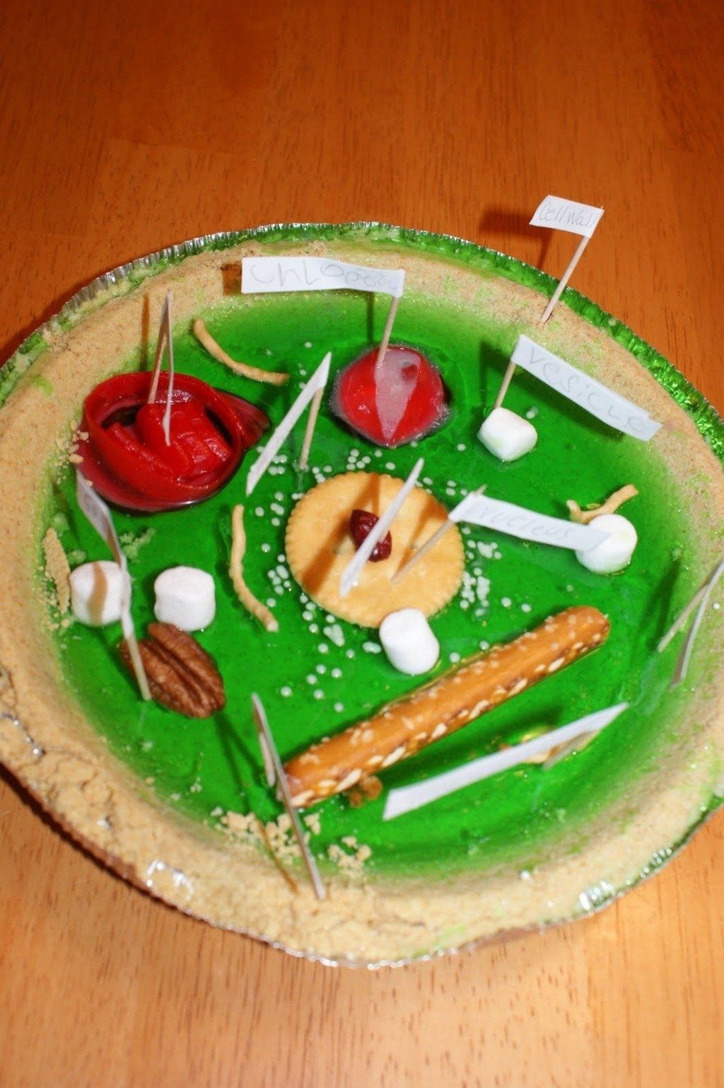 10 Ideal Edible Plant Cell Project Ideas 5 edible plant cell project ideas in cell biological science 2 2020