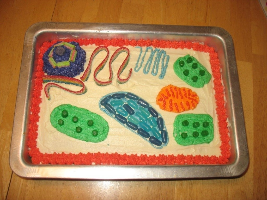 5 plant cell 3d project ideas in cell - biological science picture