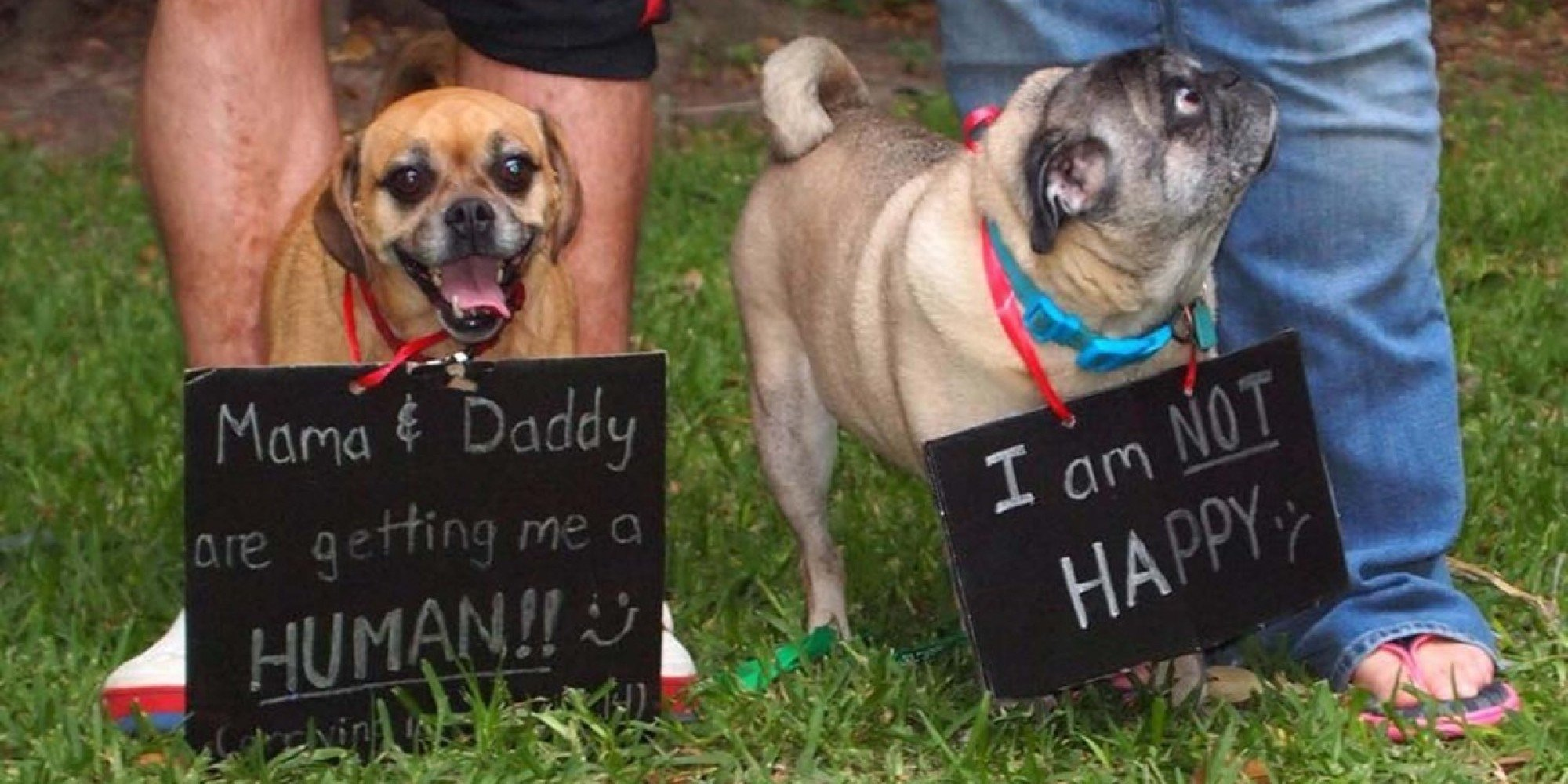 50 adorable dogs who shared their family's pregnancy news in the