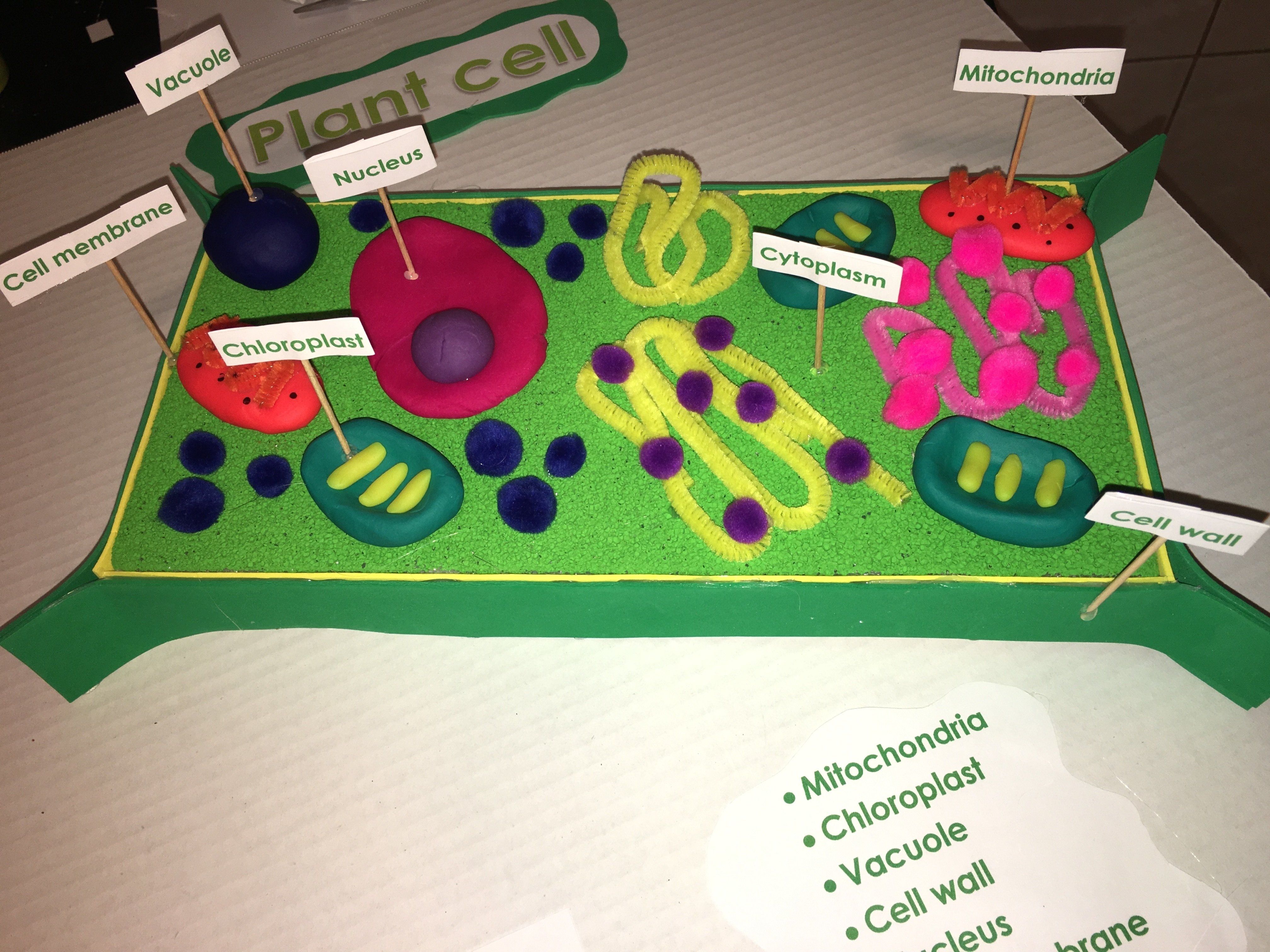 10 Pretty 3D Plant Cell Model Project Ideas 5th grade 3d plant cell model kids school projects pinterest 1 2020