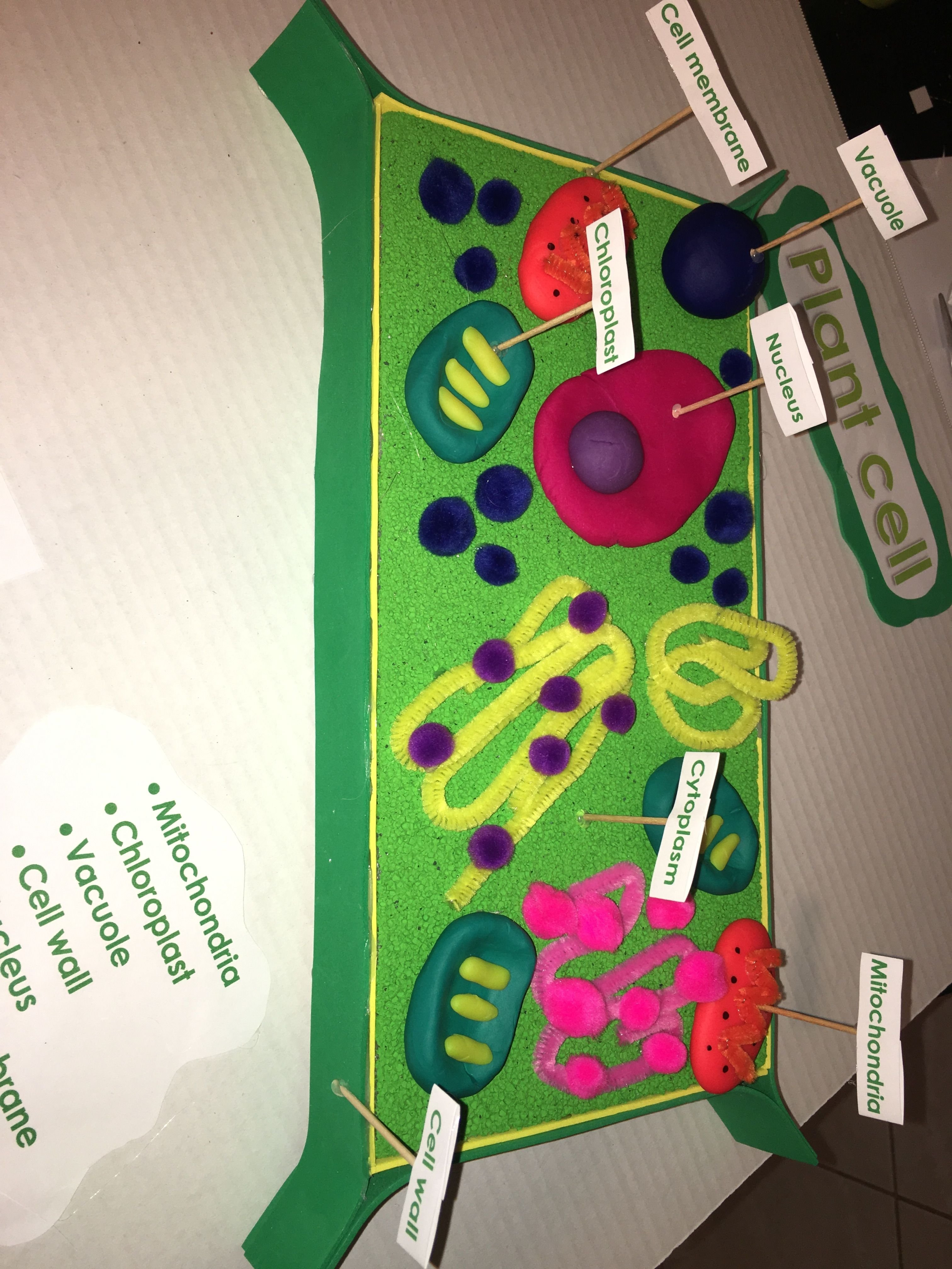10 Ideal 3D Plant Cell Project Ideas 5th grade 3d plant cell model kids school projects pinterest 2020