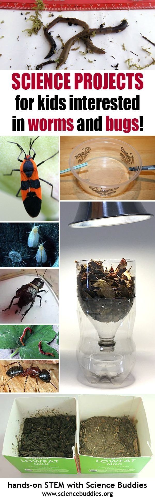 10 Pretty Science Buddies Science Fair Ideas 727 best k 12 science project ideas images on pinterest lesson 2020