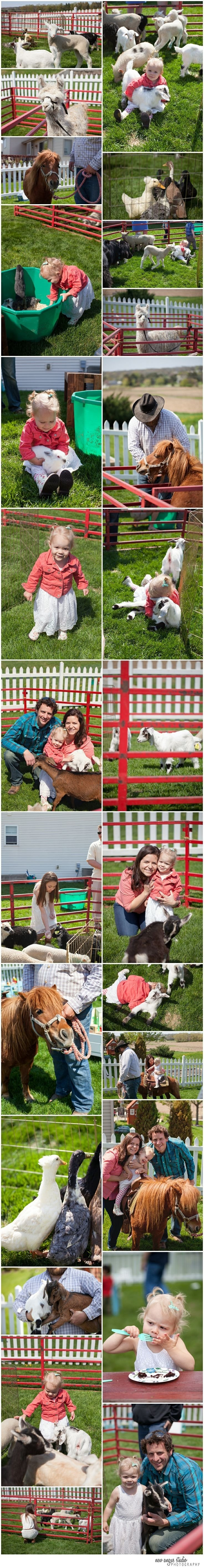 10 Gorgeous Petting Zoo Birthday Party Ideas 84 best farm petting zoo inspiration images on pinterest petting 2020