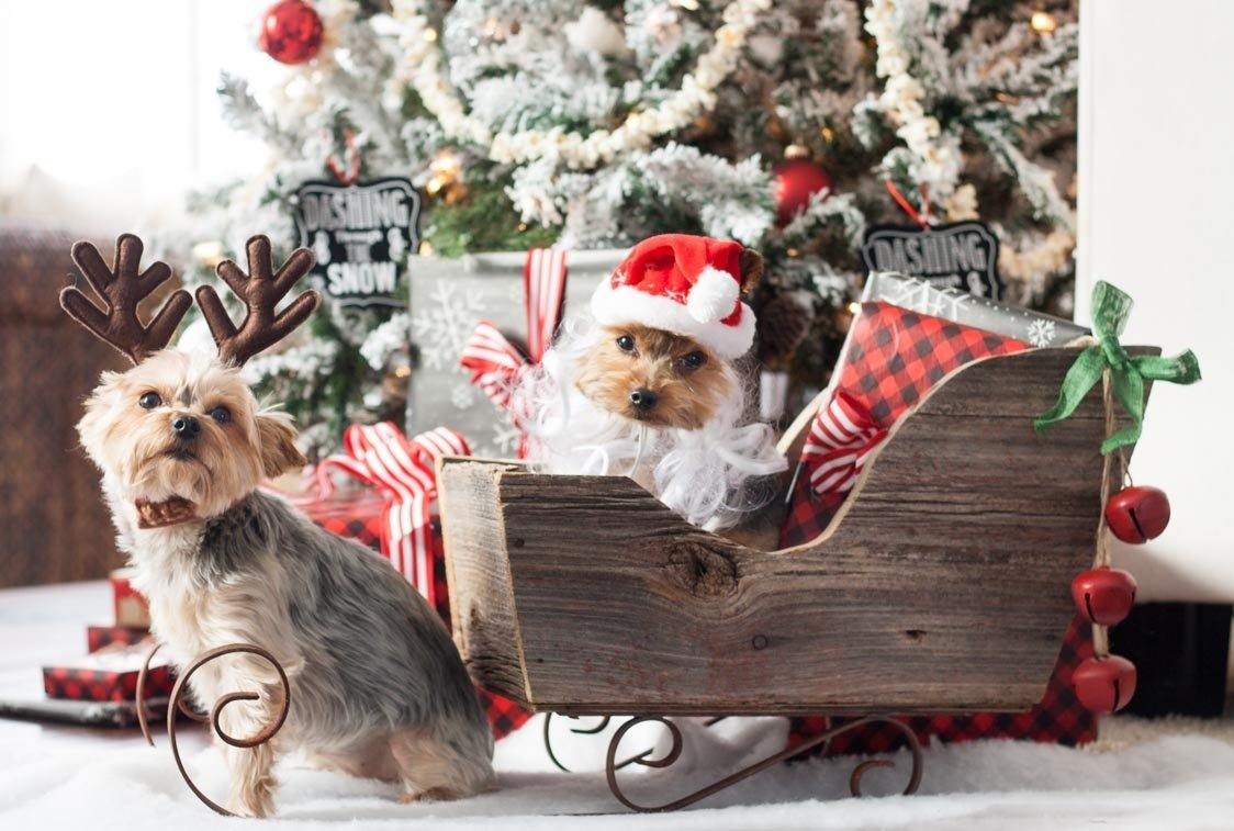 10 Attractive Christmas Card Ideas With Dogs a very yorkie christmas the lilypad cottage 1 2021