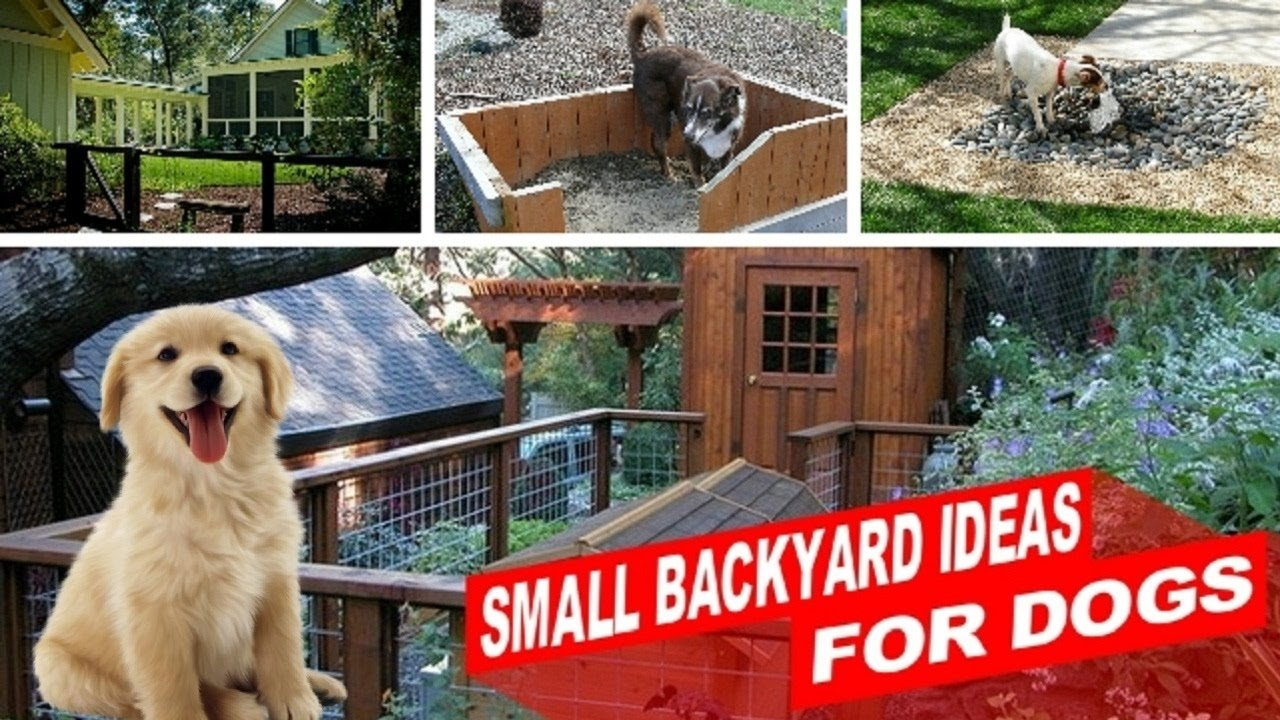 10 stunning backyard landscaping ideas for dogs