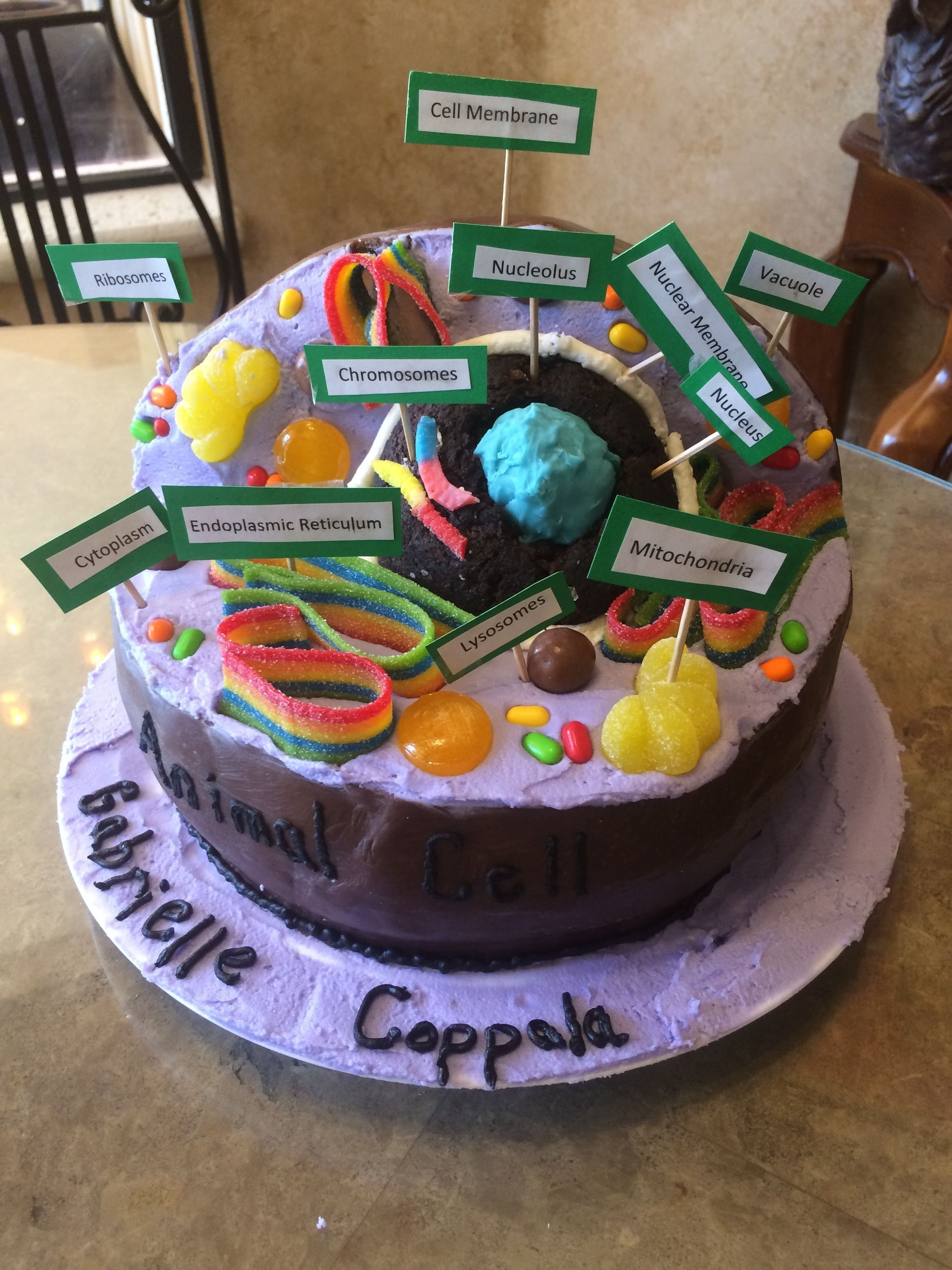 10 Lovable Animal Cell Model Project Ideas animal cell cake animal cell 3 d cake pinterest cell model 2020