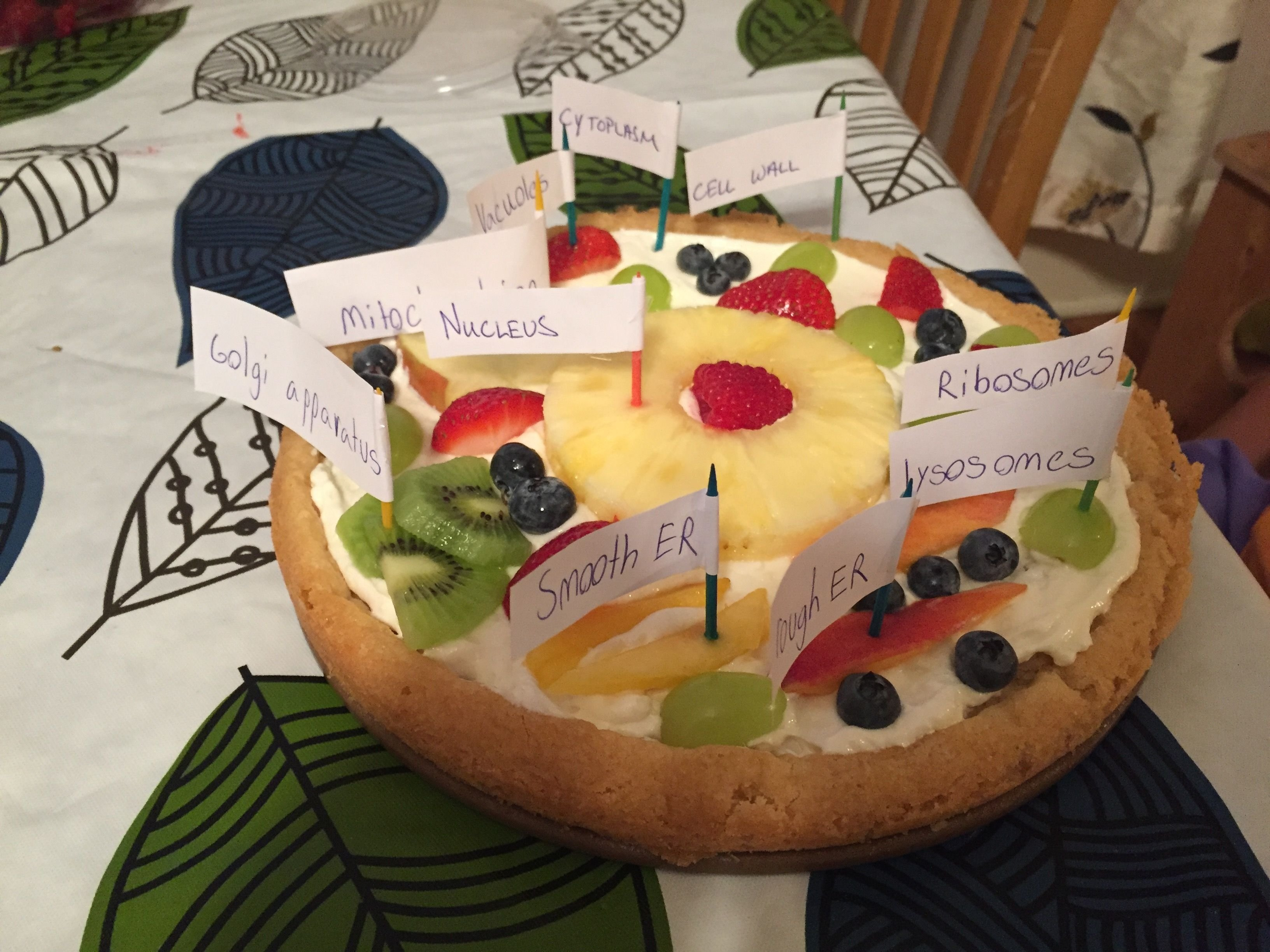 10 Ideal Edible Plant Cell Project Ideas animal cell fruit pizza animal cell pizza ingredients plant cell 2020
