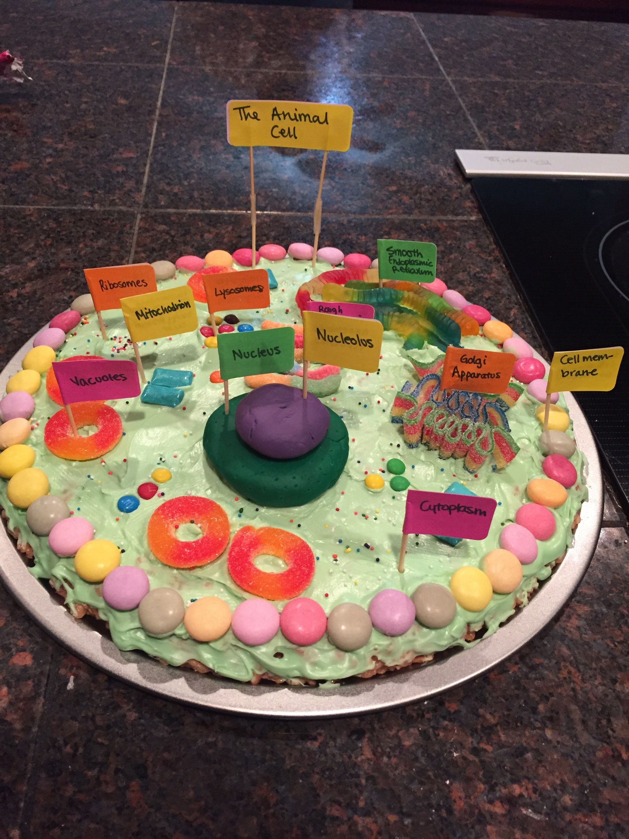 animal cell project! edible! | project ideas! | pinterest | animal