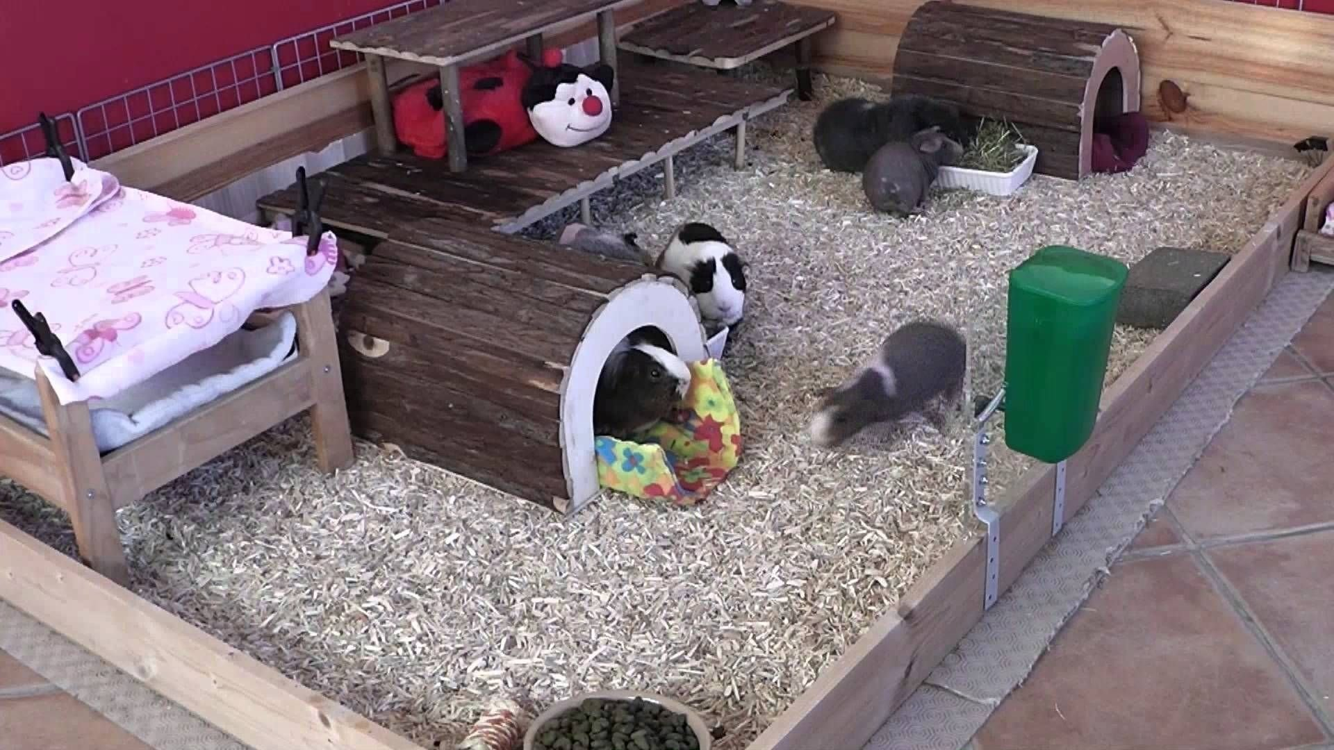 10 Ideal Homemade Guinea Pig Cage Ideas awesome ideas for guinea pig hutch and cages diy guinea pig cage 2020