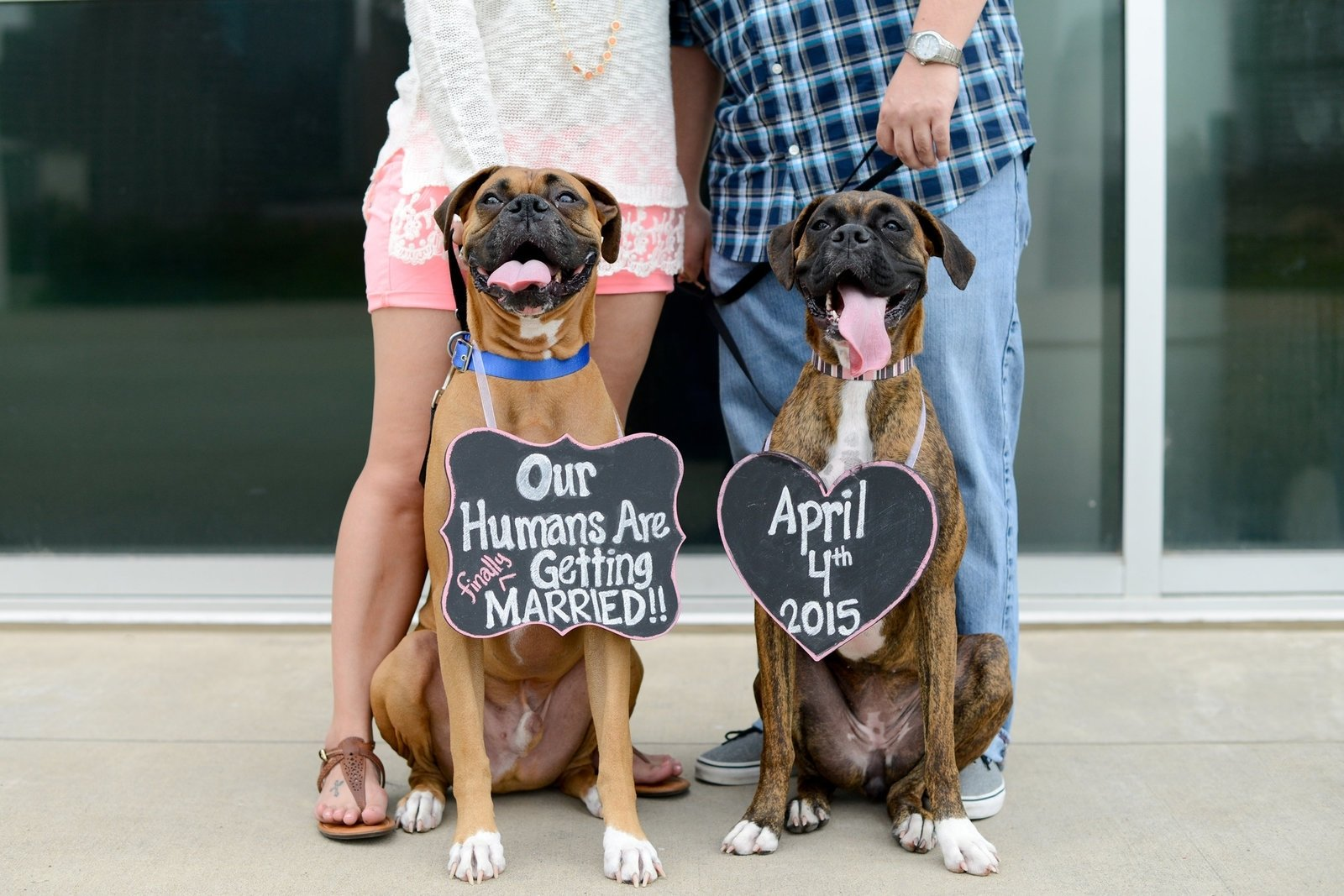 10 Nice Save The Date Ideas With Dogs awesome save the date photo ideas with dogs selection photo and 2020