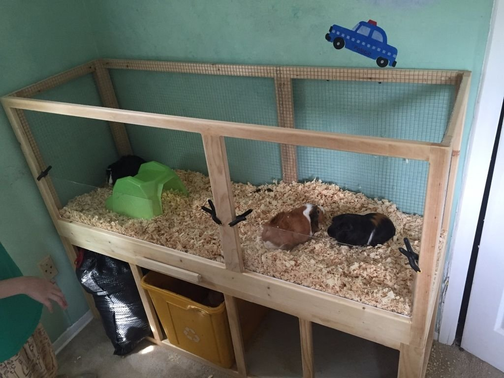 10 Ideal Homemade Guinea Pig Cage Ideas build a guinea pig cage with easy cleaning projects with kids 2020
