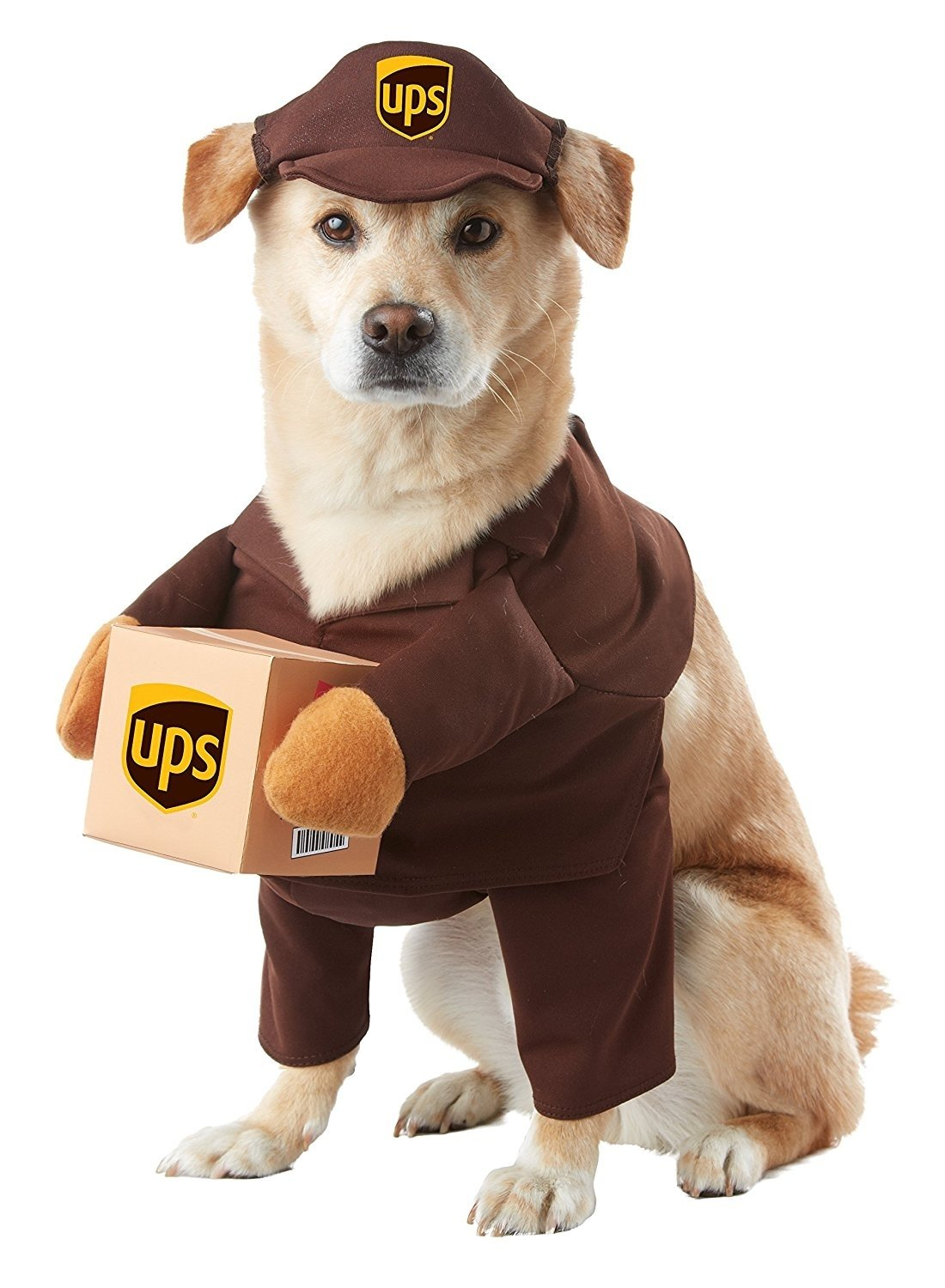 10 Stylish Halloween Costumes For Dogs Ideas california costumes ups pal pet halloween costume click image for 1 2020