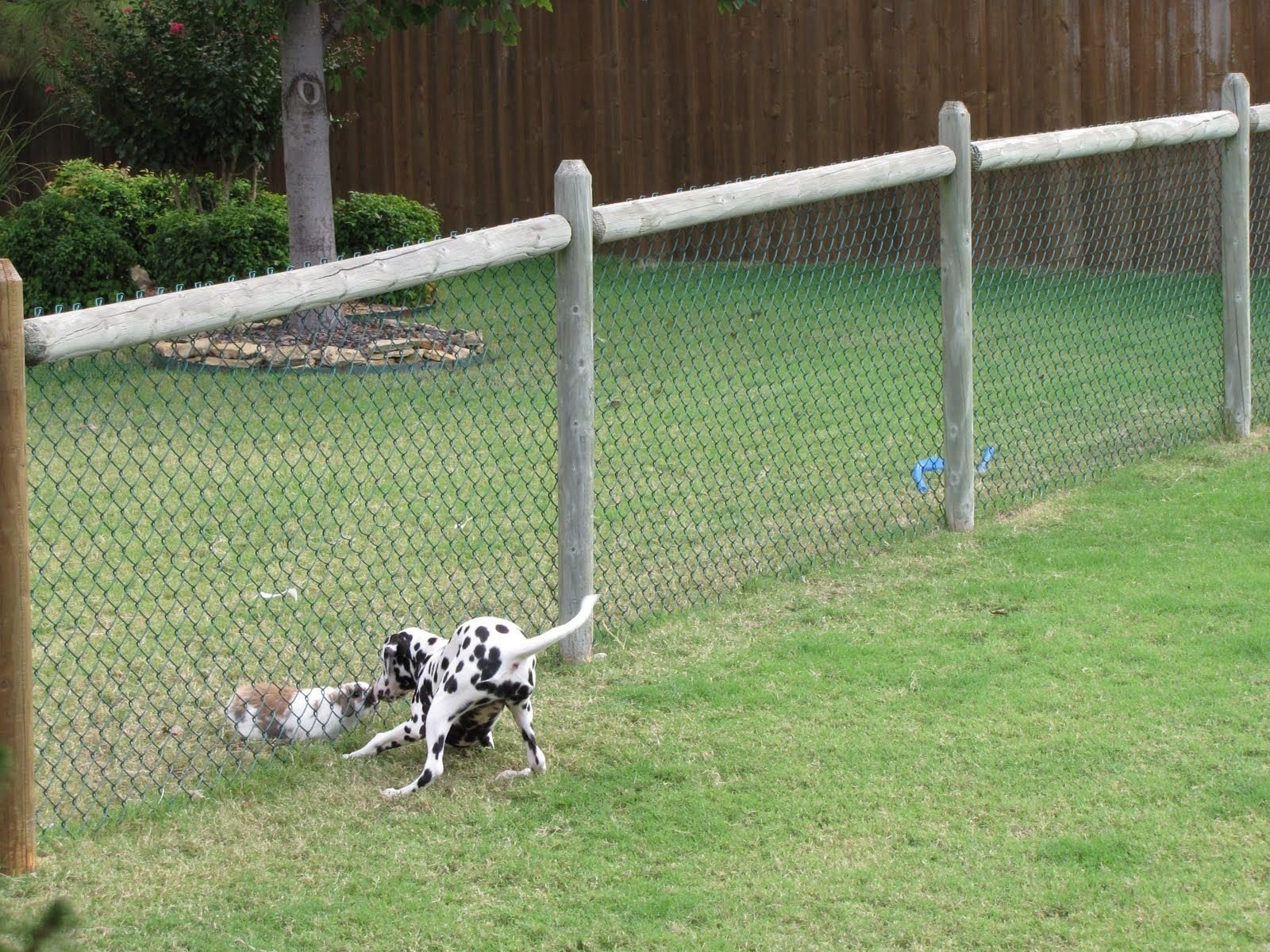 10 Stylish Cheap Fencing Ideas For Dogs
