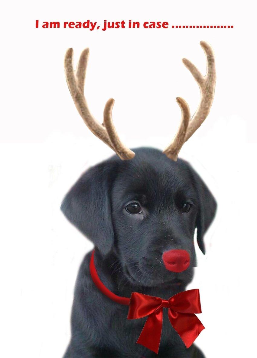 10 Wonderful Dog Photo Christmas Card Ideas