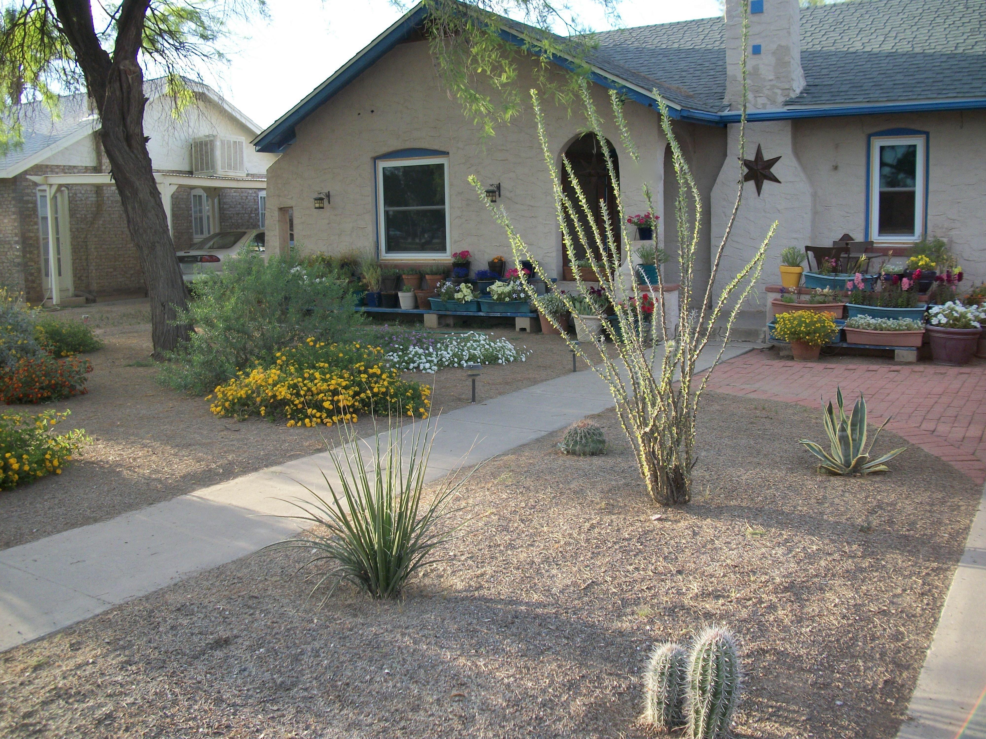desert garden ideas - unique download front yard desert landscaping