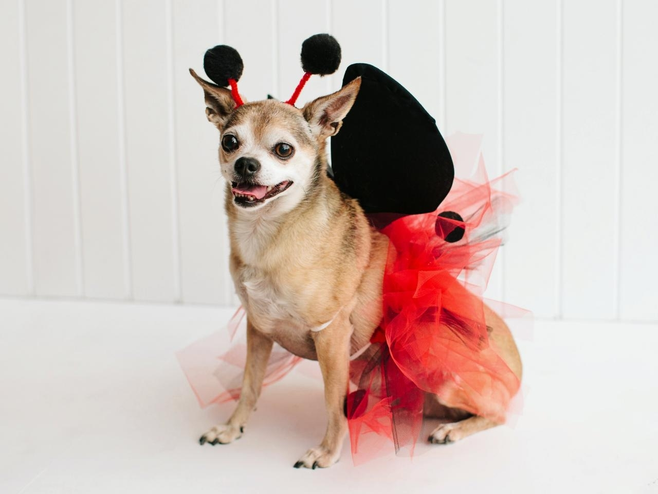 10 Stylish Halloween Costumes For Dogs Ideas %name 2020