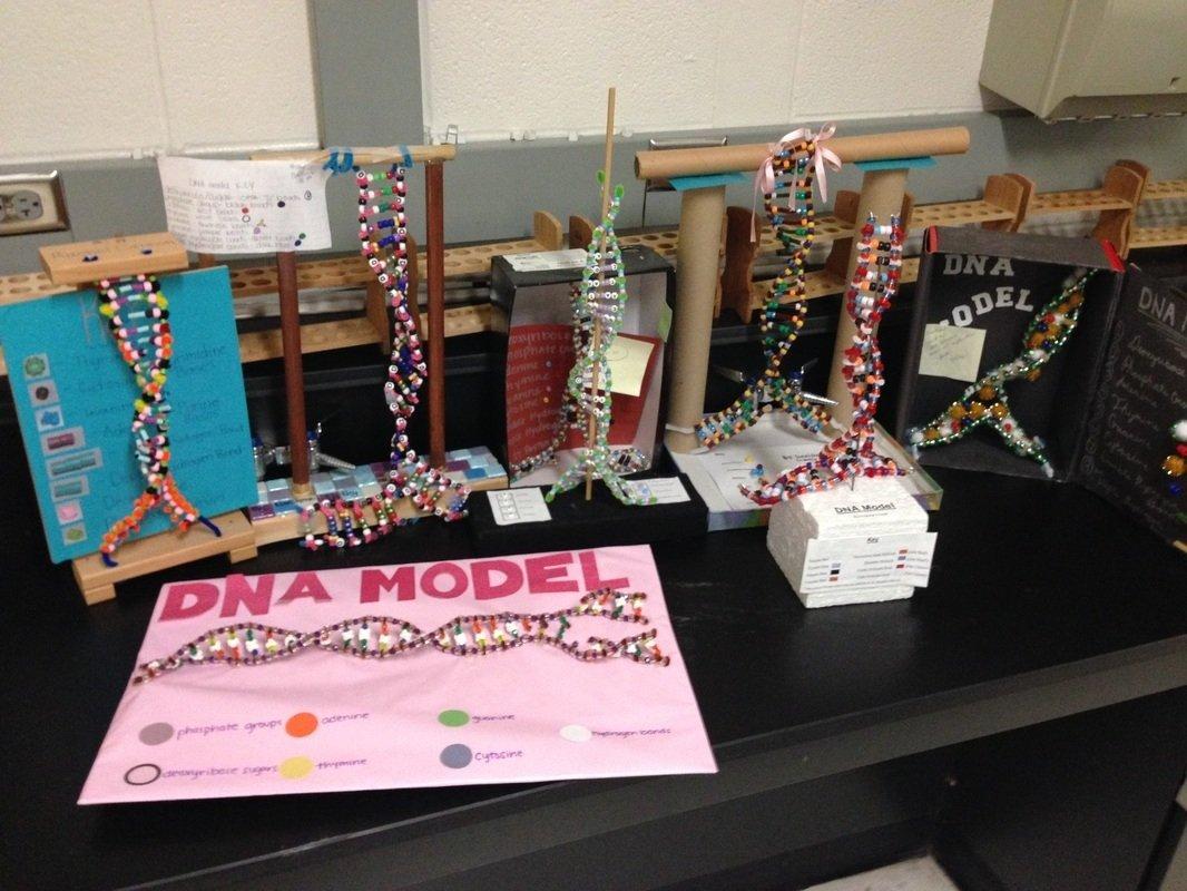 10 Attractive 3D Dna Model Project Ideas dna model project diferentes soportes dna pinterest dna 2021