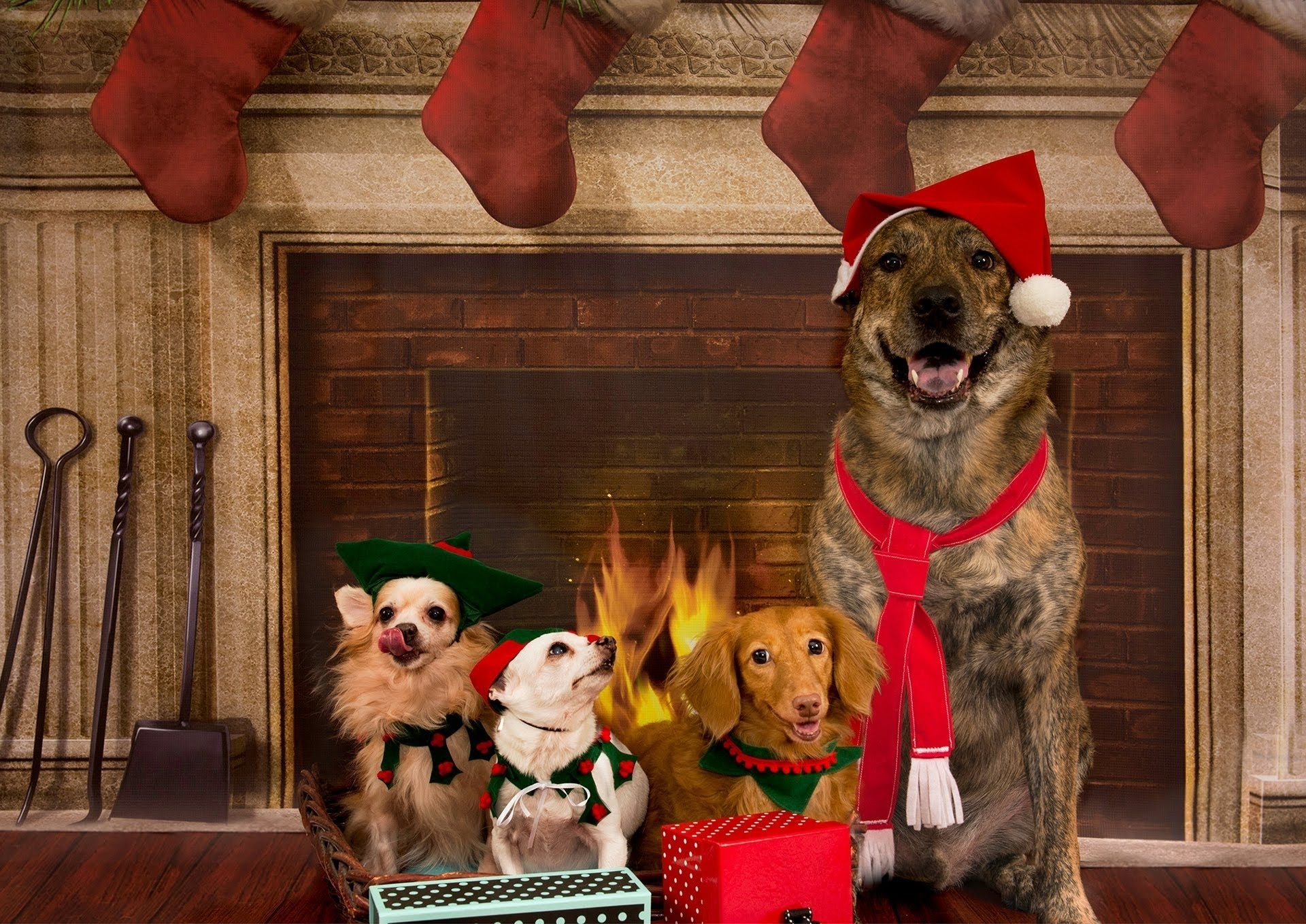 10 Attractive Christmas Card Ideas With Dogs dogs christmas photo shoot at c s ling photography youtube 1 2021