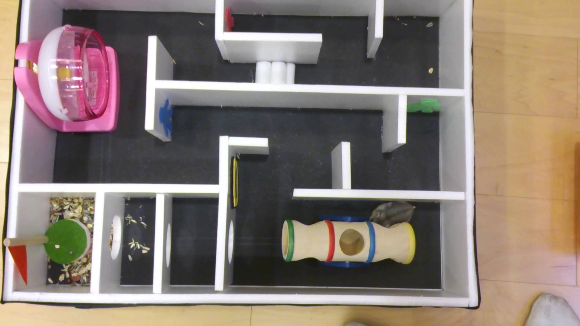 10 Stunning 9Th Grade Science Fair Project Ideas dylan tangdanny chen hamster maze9th grade science fair project 3 2020