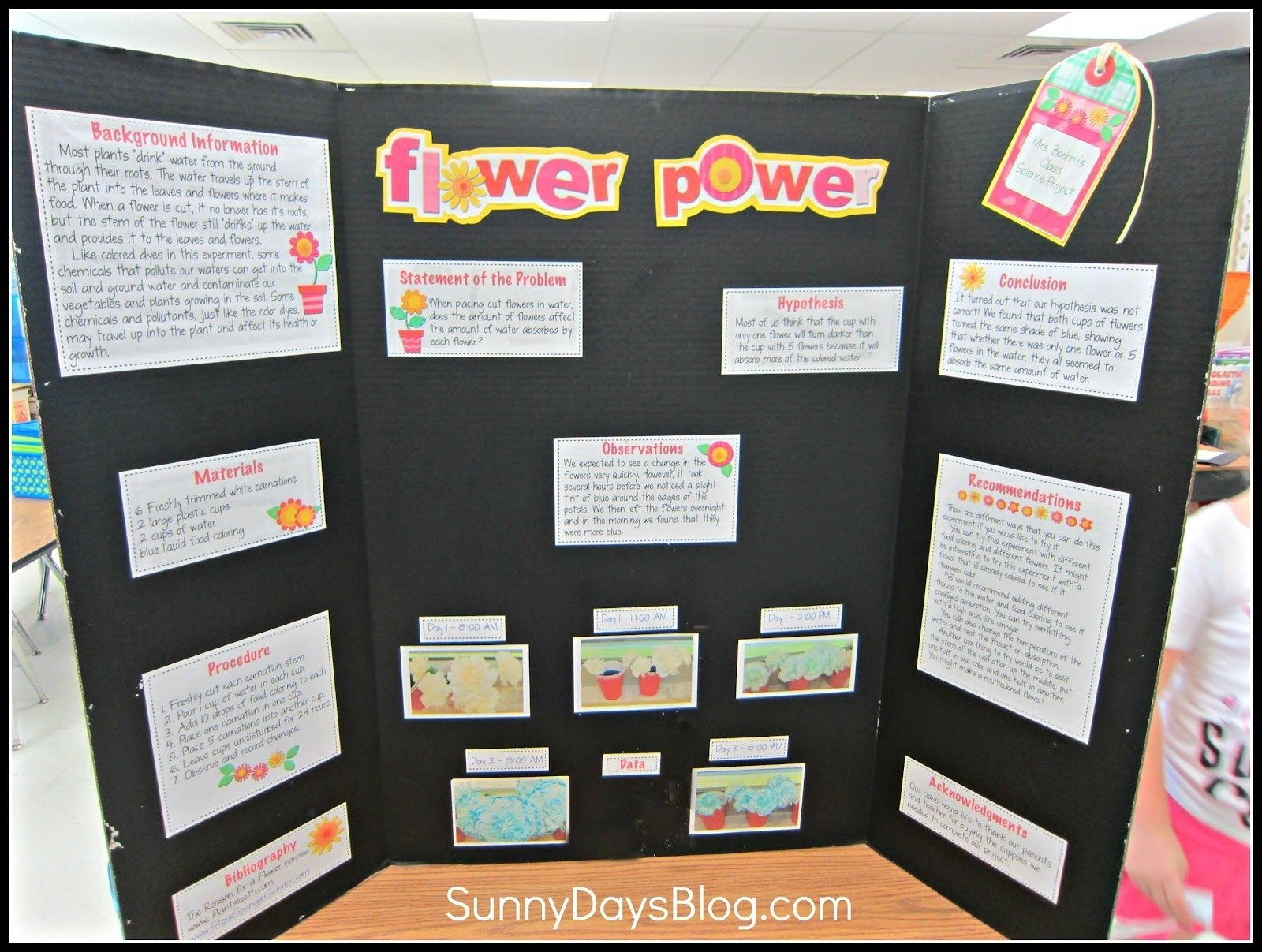 10 Fantastic Plant Science Fair Project Ideas easy science fair project should i ever need to have a sample from 8 2020