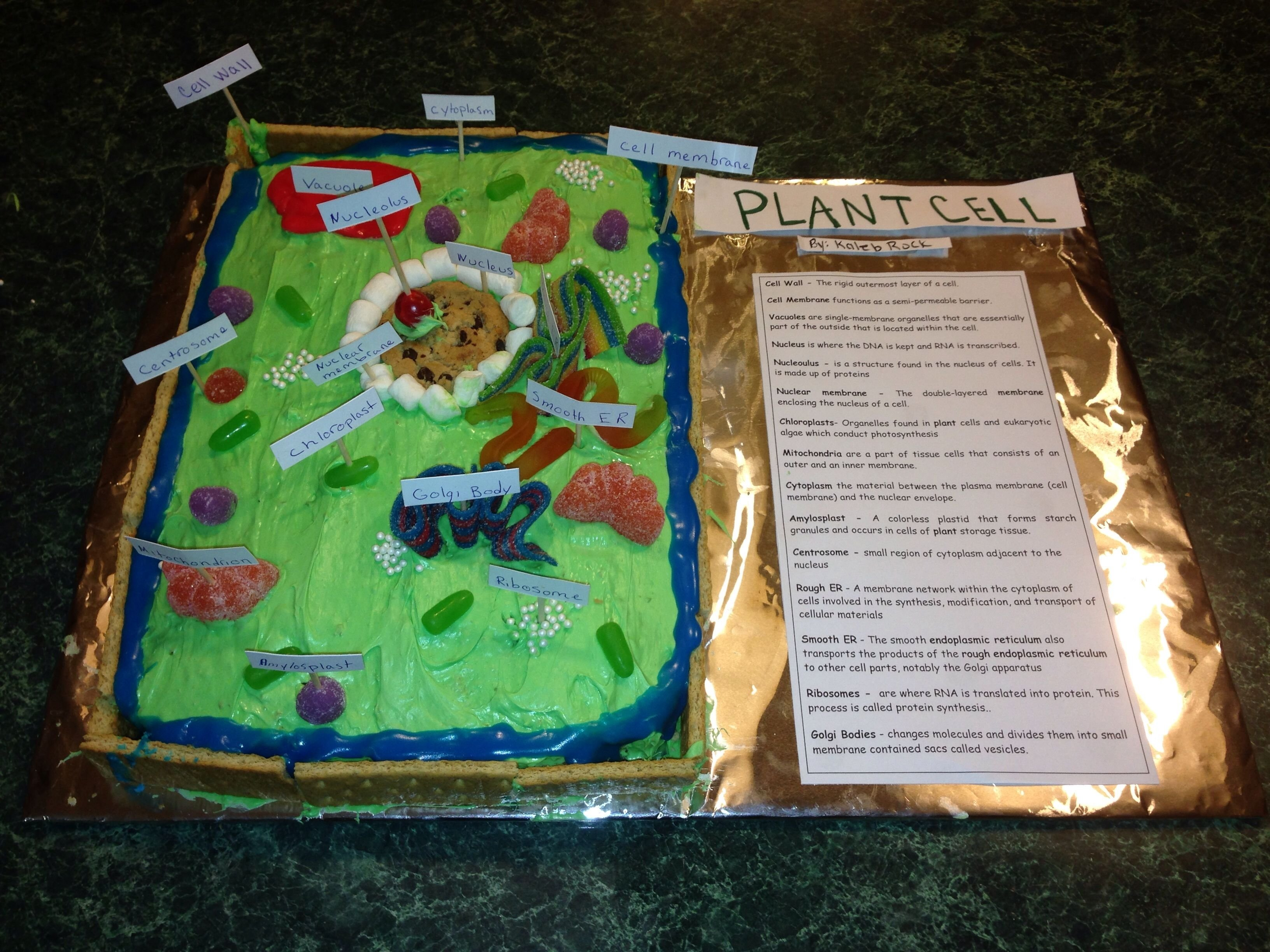 10 Stylish Plant Cell 3D Model Ideas edible plant cell 5th grade project learning pinterest plant 2020