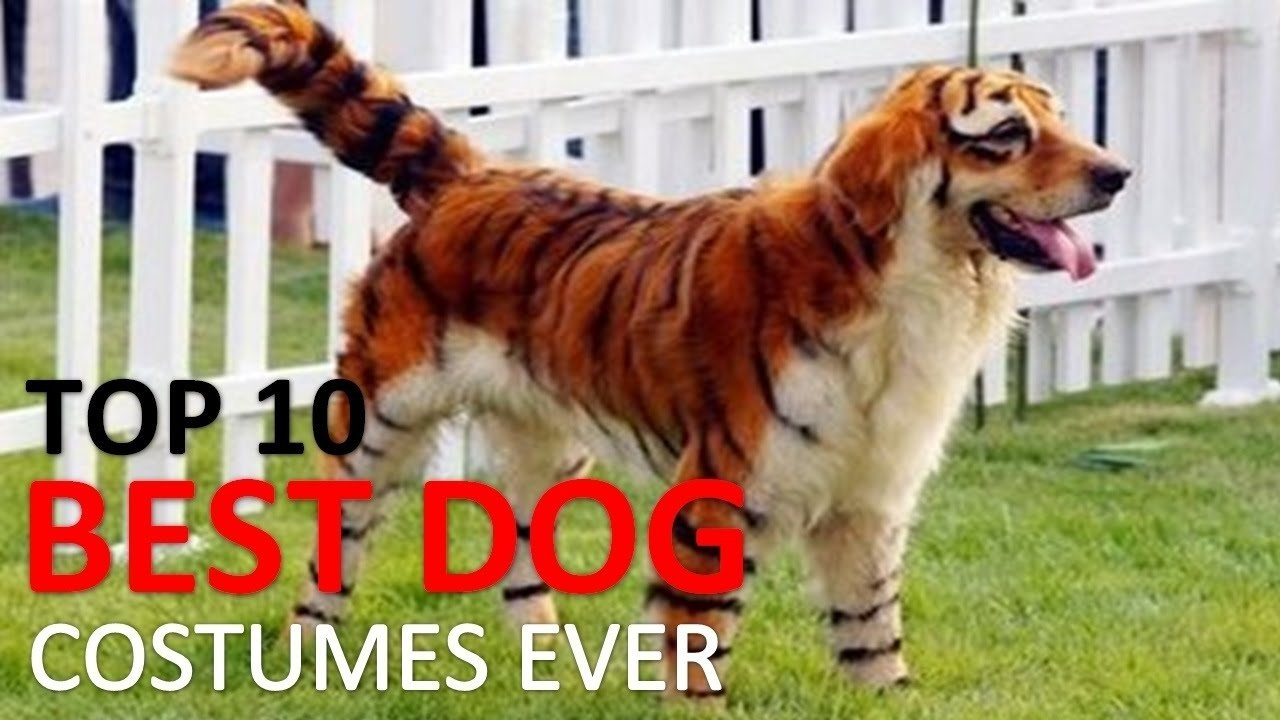 10 Stylish Halloween Costumes For Dogs Ideas f09f8e83 10 best dog costumes and creative halloween ideas f09f8e83 youtube 1 2020