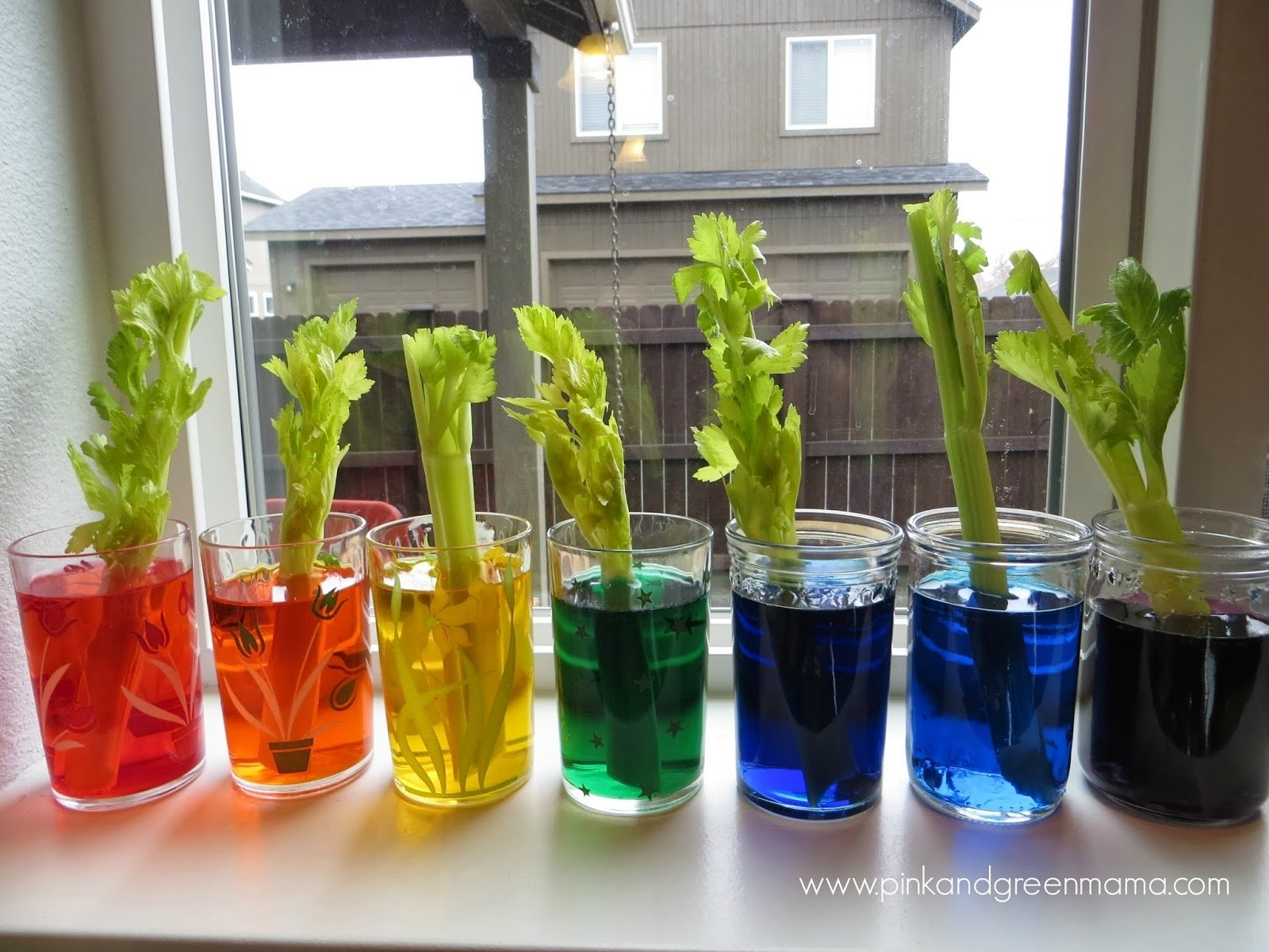 10 Best Science Project Ideas 4Th Grade fourth grade science labs homeshealth