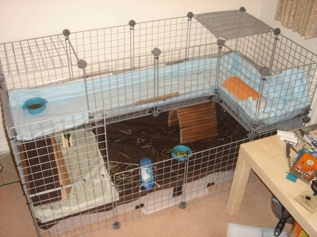 10 Ideal Homemade Guinea Pig Cage Ideas guinea pig cc cage ideas thread 2 full storeys cc cages 2020