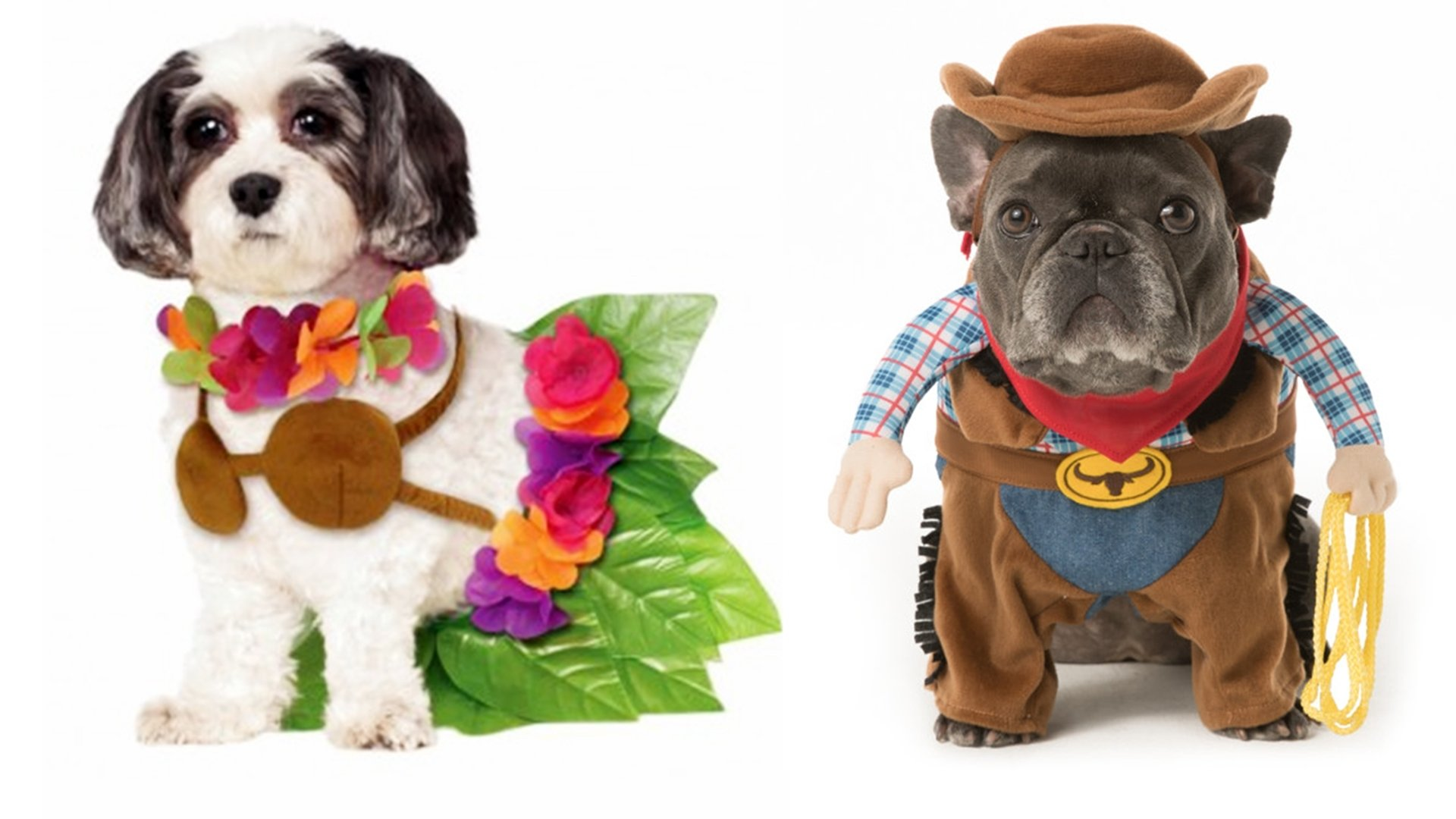 10 Stylish Halloween Costumes For Dogs Ideas halloween dog costume ideas 32 easy cute costumes for your canine 1 2020