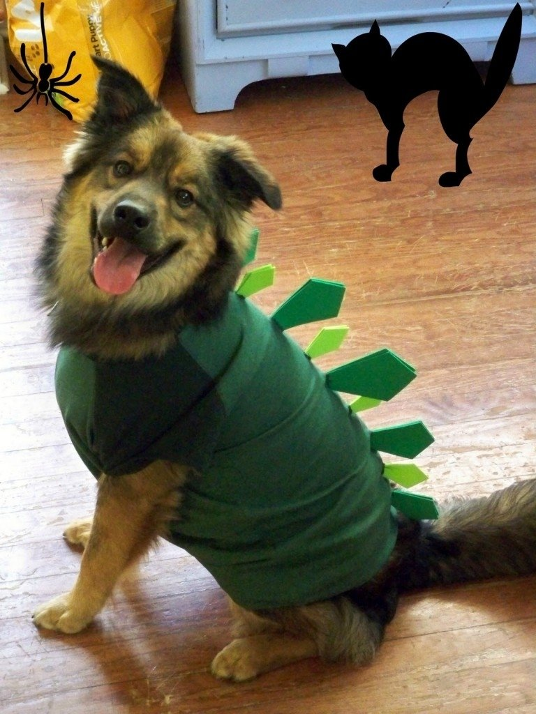 10 Stylish Halloween Costumes For Dogs Ideas homemade dog halloween costume ideas clothing trends 2020