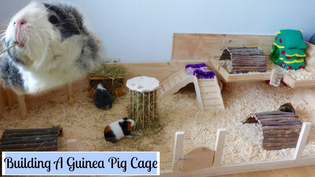 how to build your own wooden guinea pig cage | diy cage - youtube