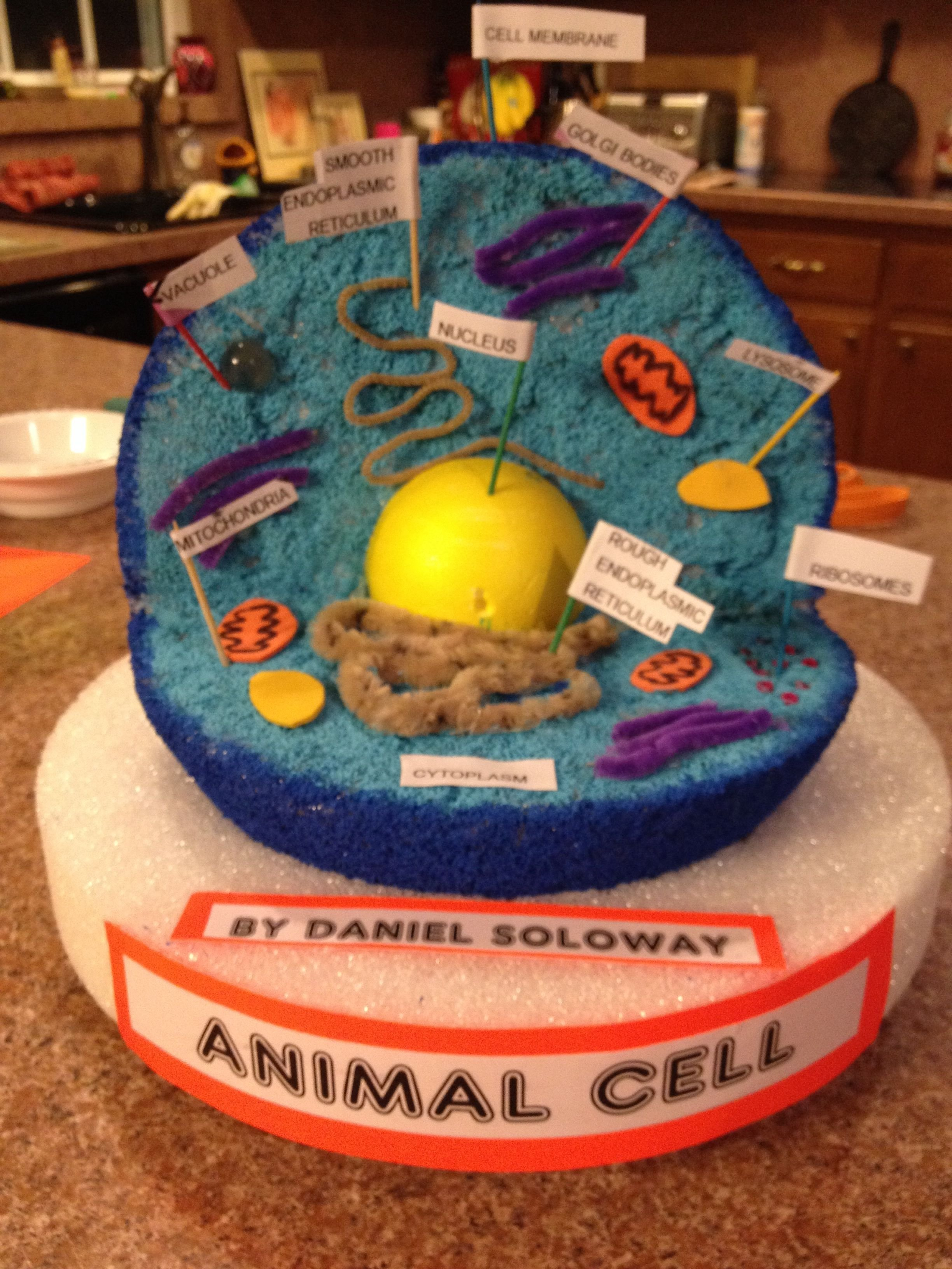 10 Unique 3D Animal Cell Project Ideas how to make a animal cell model with home objects how to make a 6
