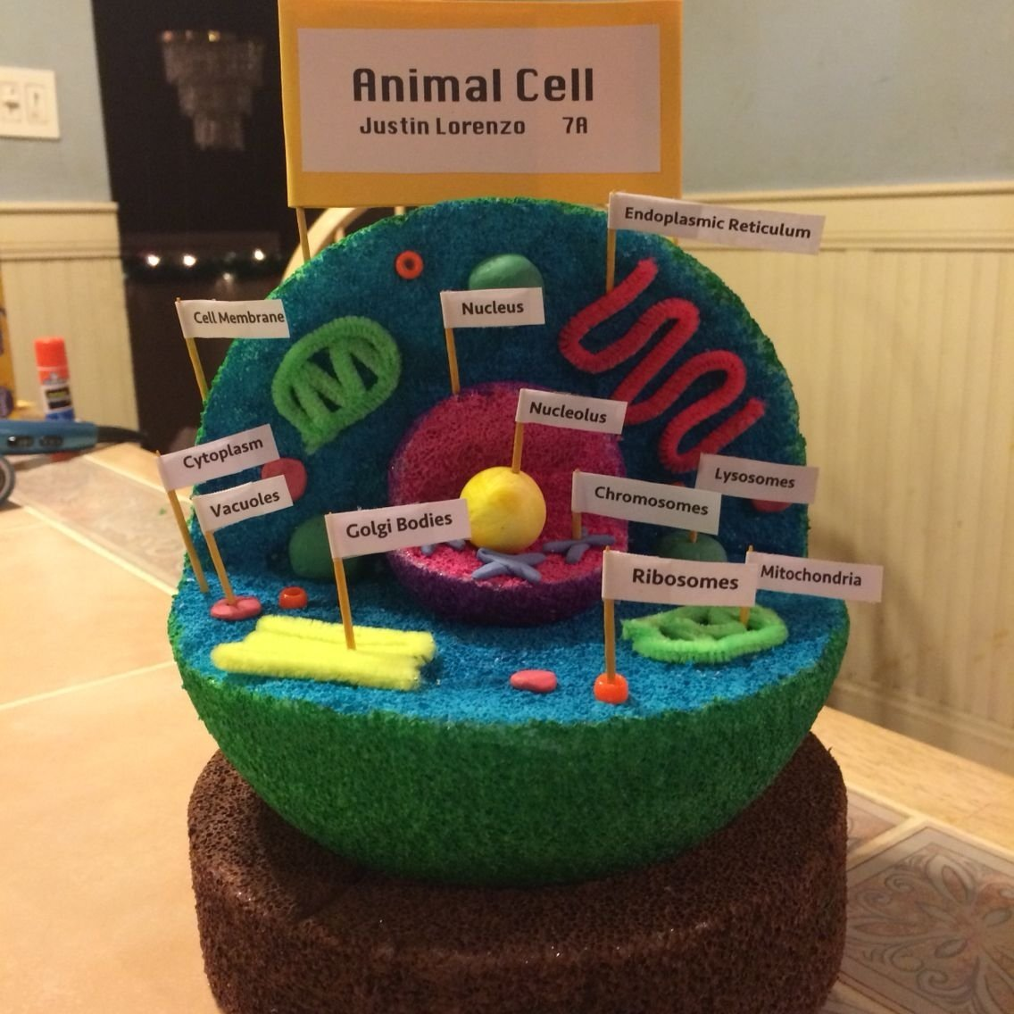 10 Unique 3D Animal Cell Project Ideas image result for animal cell model 7th grade etc pinterest