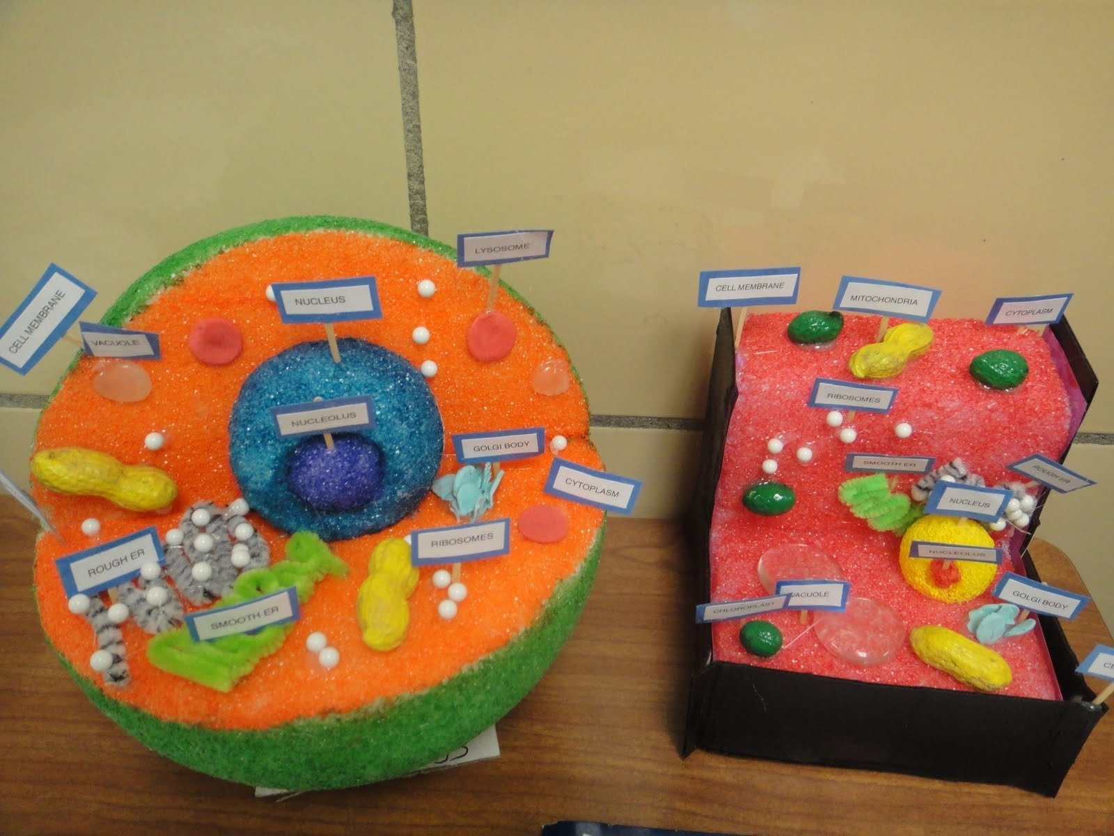 10 beautiful plant cell project ideas for kids 10 beautiful plant cell project ideas for kids katies klassroom cell functions project 5th grade ccuart Choice Image