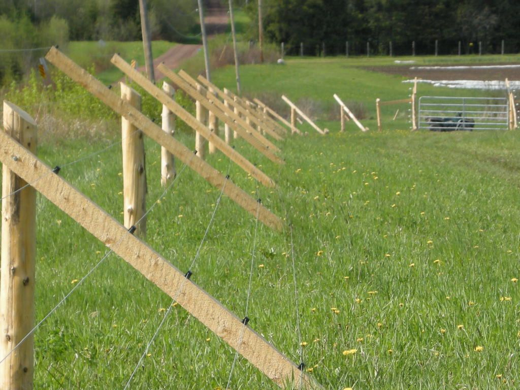 10 Fantastic Garden Fence Ideas To Keep Deer Out keeping deer out of the garden works like a charm garden ideas 2020