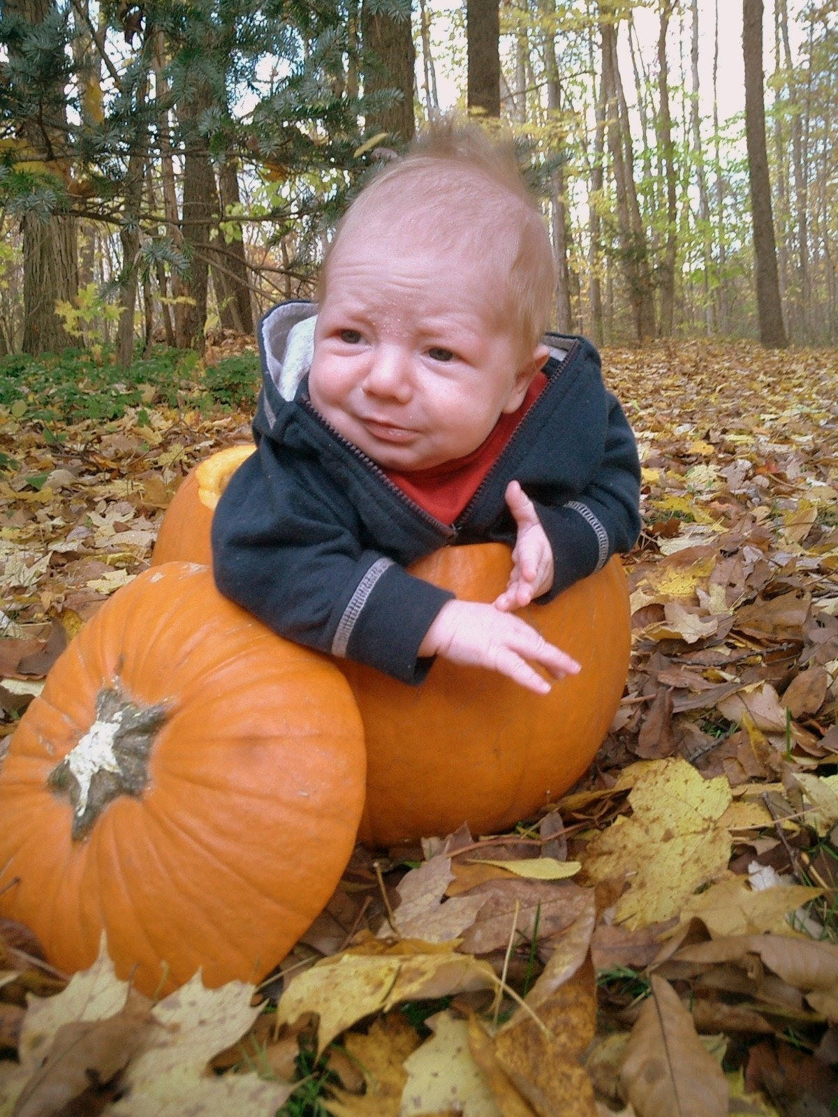 10 Great Fall Picture Ideas For Babies kids in pumpkins fall photo idea celebrate every day with me 1 2020