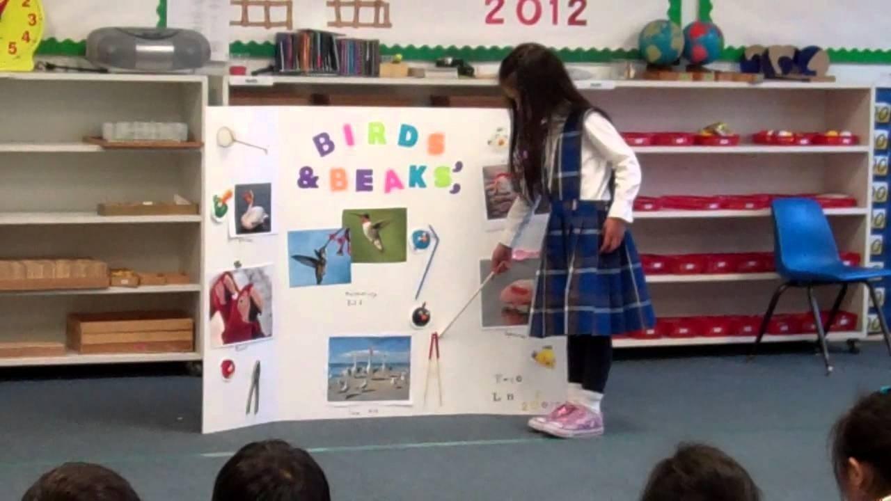 10 Lovable Kindergarten Science Fair Project Ideas kindergarten science fair 2012 fayes first presentation youtube 2020