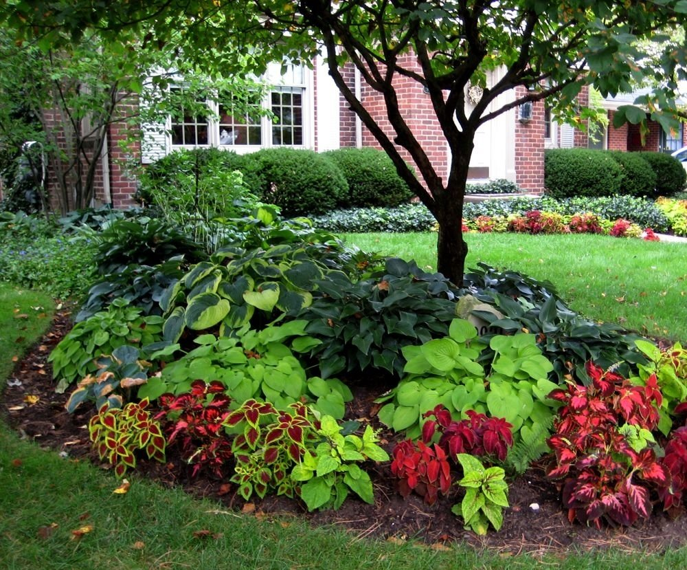 landscape ideas for front of house shade with beautiful plants