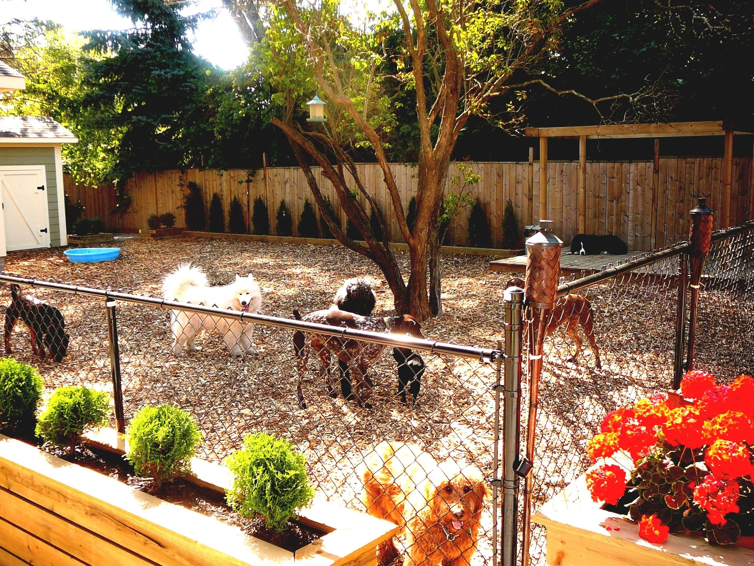 10 Stunning Backyard Landscaping Ideas For Dogs landscaping ideas with dogs in small backyard top on a budget home 2020