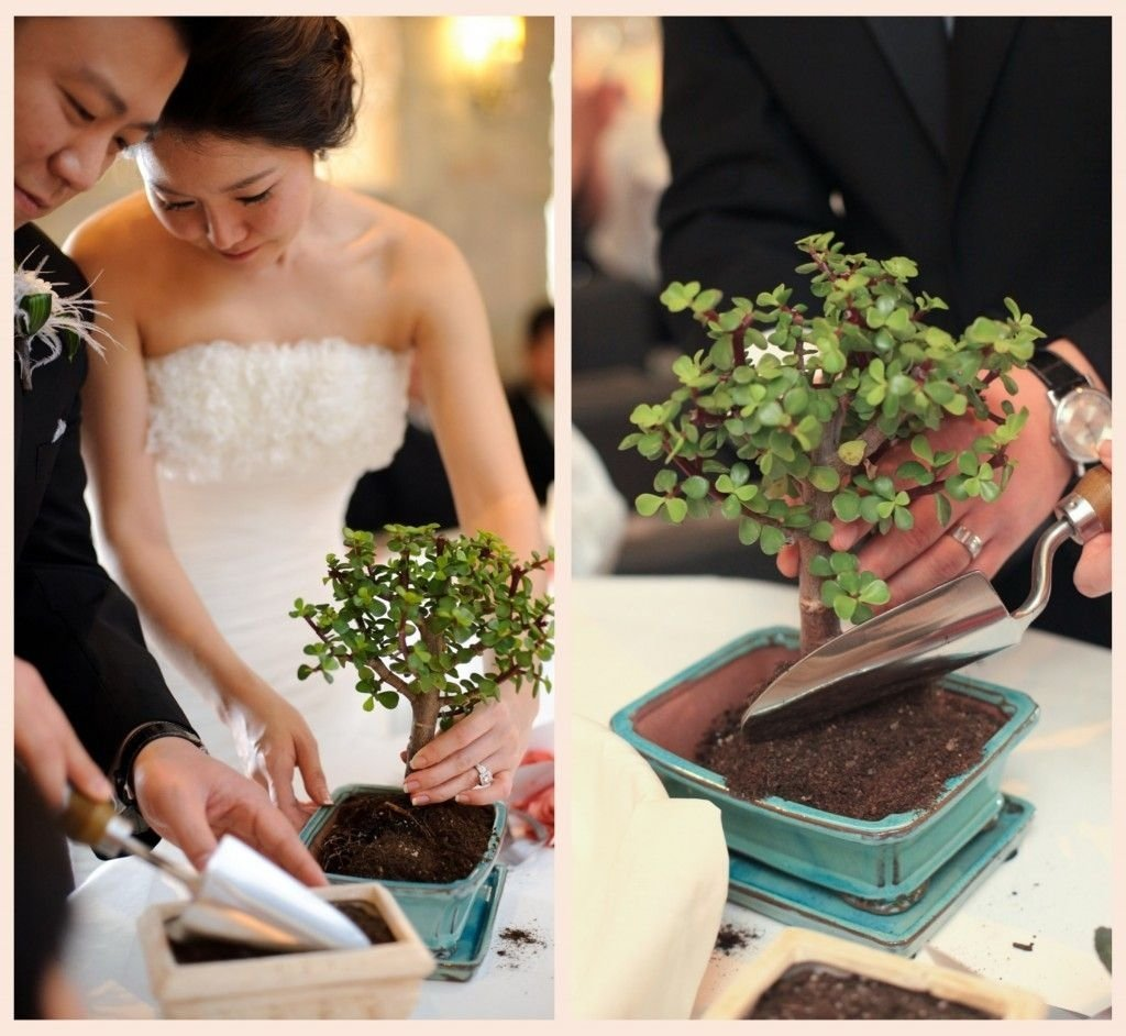 10 Stylish Wedding Ceremony Ideas Instead Of Unity Candle love this idea a tree planting ceremony instead of a unity candle 2021